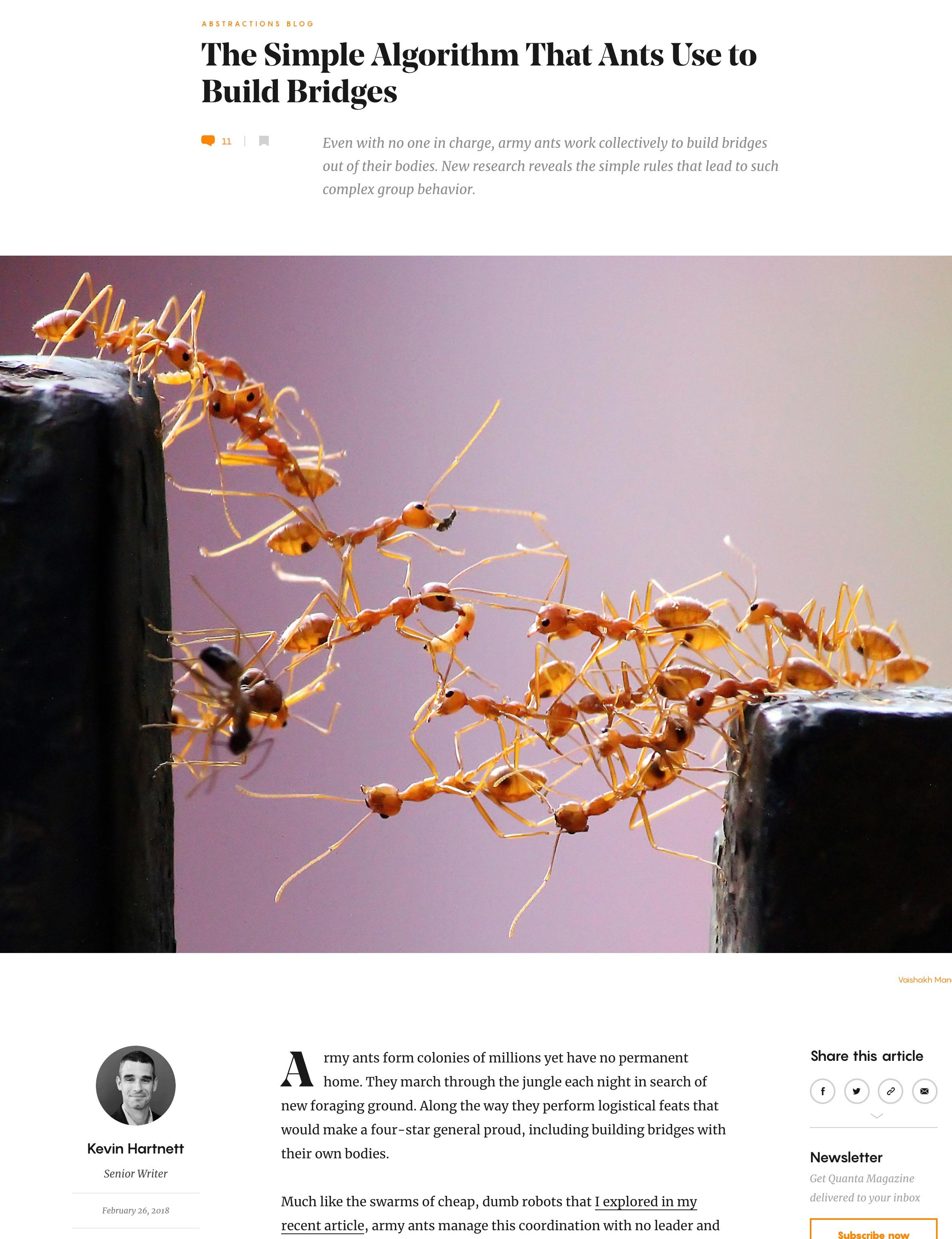20180226_Ants.jpg