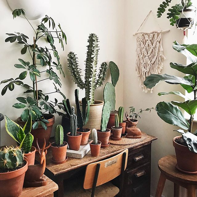 No room for a computer I guess my emails will have to wait! 🤷🏻‍♀️🌿💚🌵😊