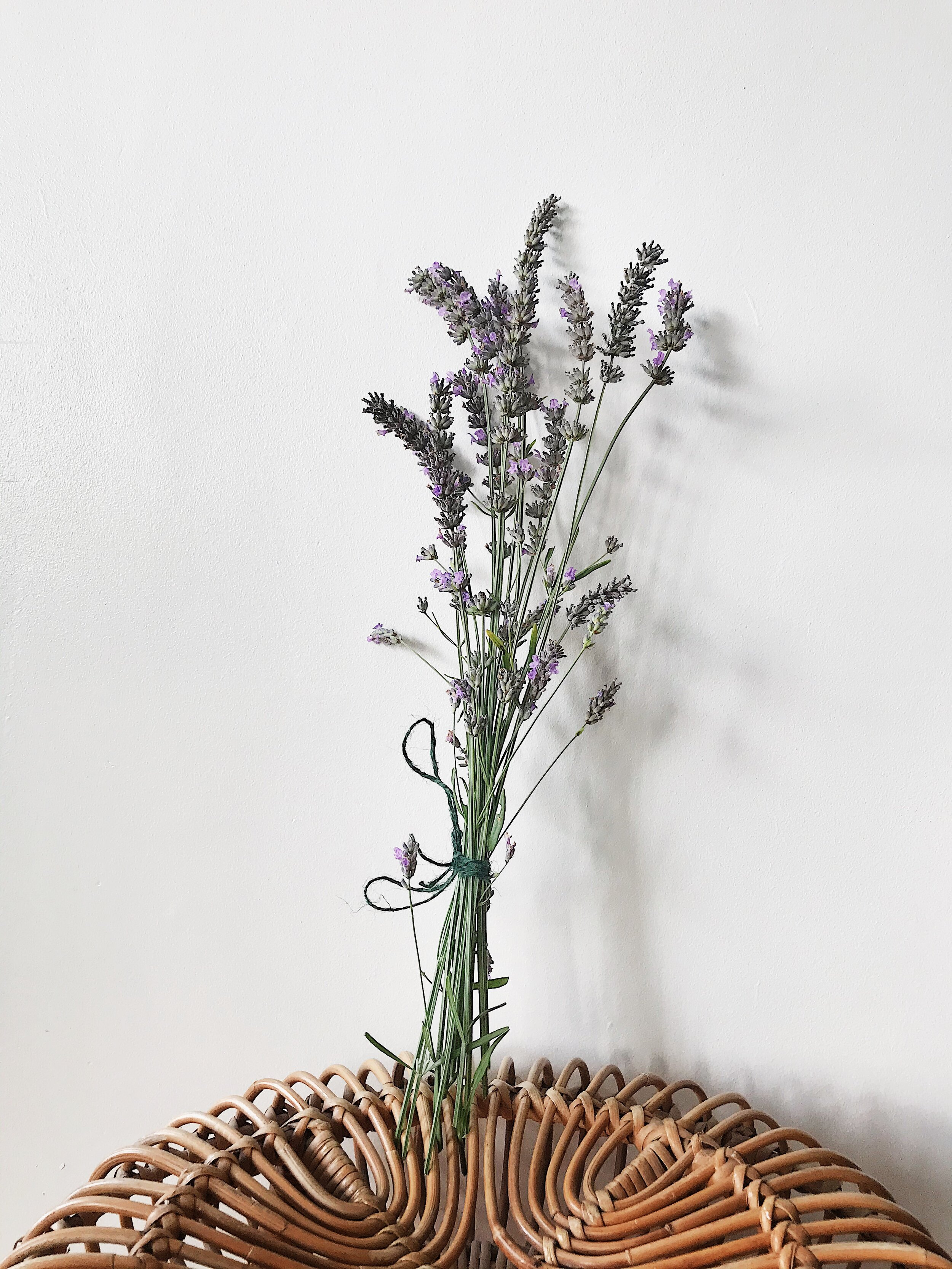 Lavender - I know Lavender isn't a house plant, but I love to take cuttings and put them in every bedroom in the house. It's also proven that Lavender can help you sleep. Plus they look so pretty.