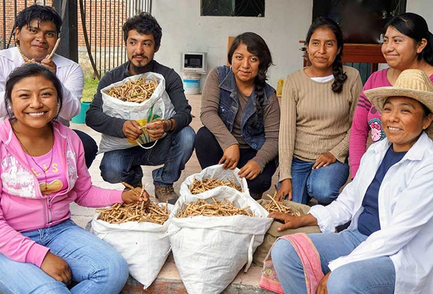 MEXICO NEWS DAILY _ Mesquite a Protein-Rich Ancestral Food That is Making a Comeback     Photo credit: Tejiendo Alianzas