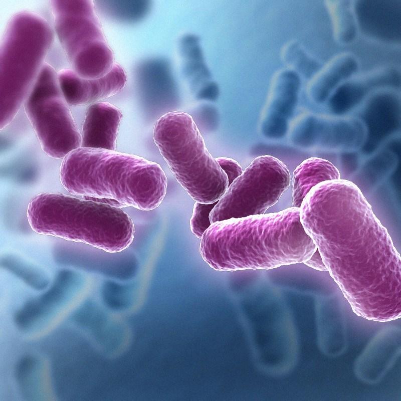 bacillus-pink.jpg