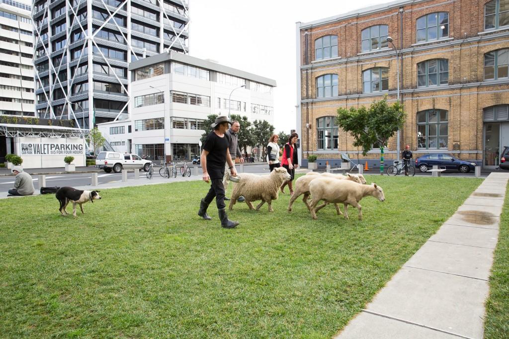 Sheep-released-1-1024x682.jpg