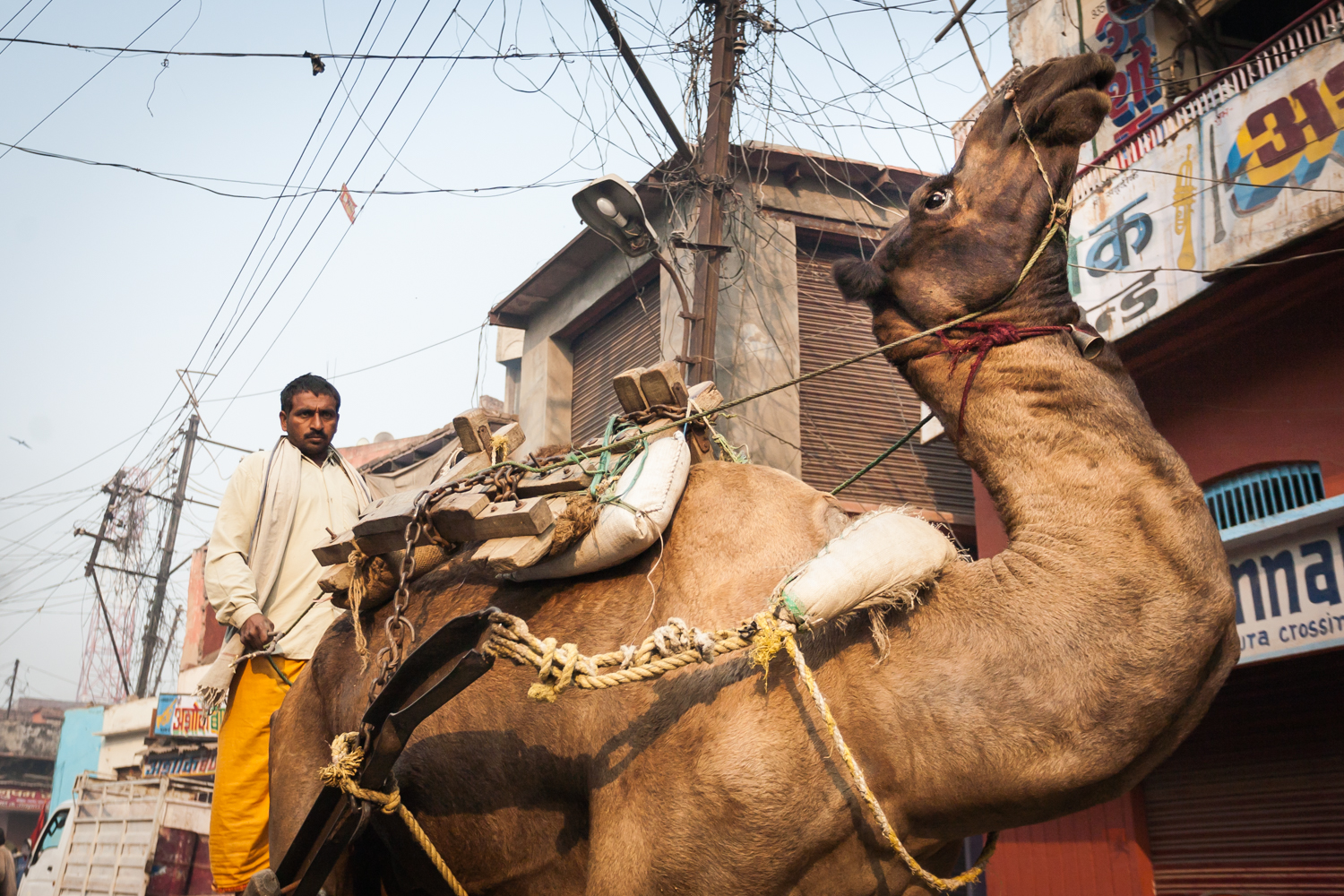 man-riding-camel-pushkar-india.jpg