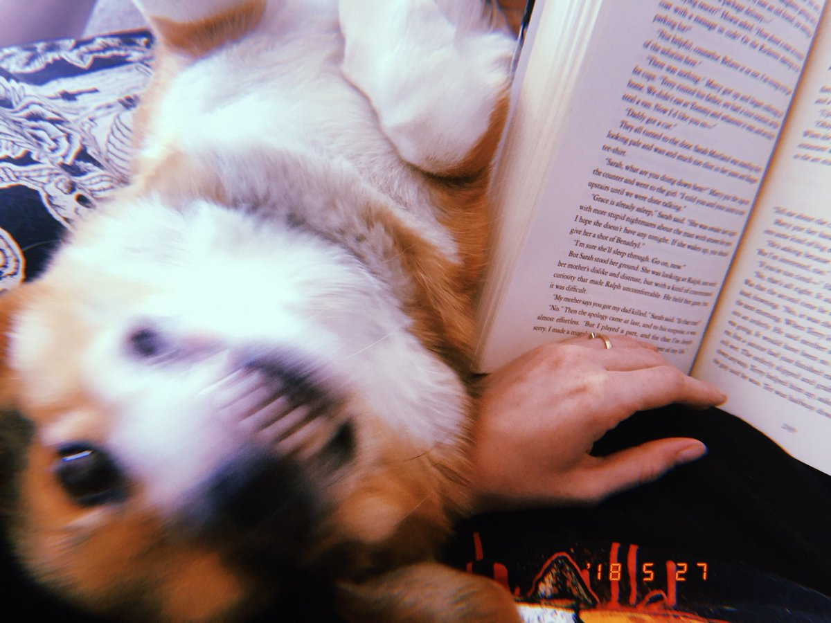 snapshot of my dog being an absolute psycho while I try to read