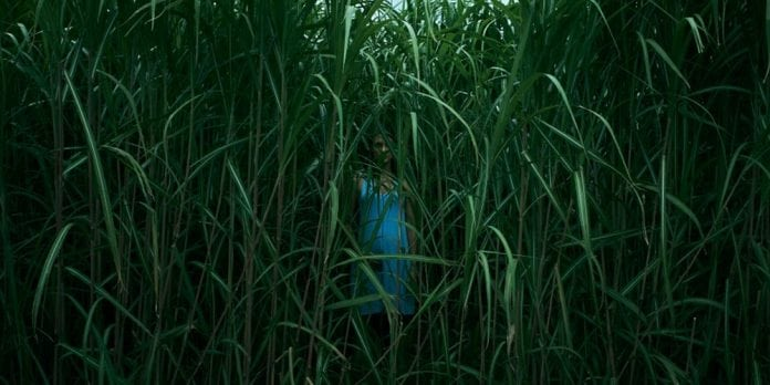 in_the_tall_grass-696x348.jpg