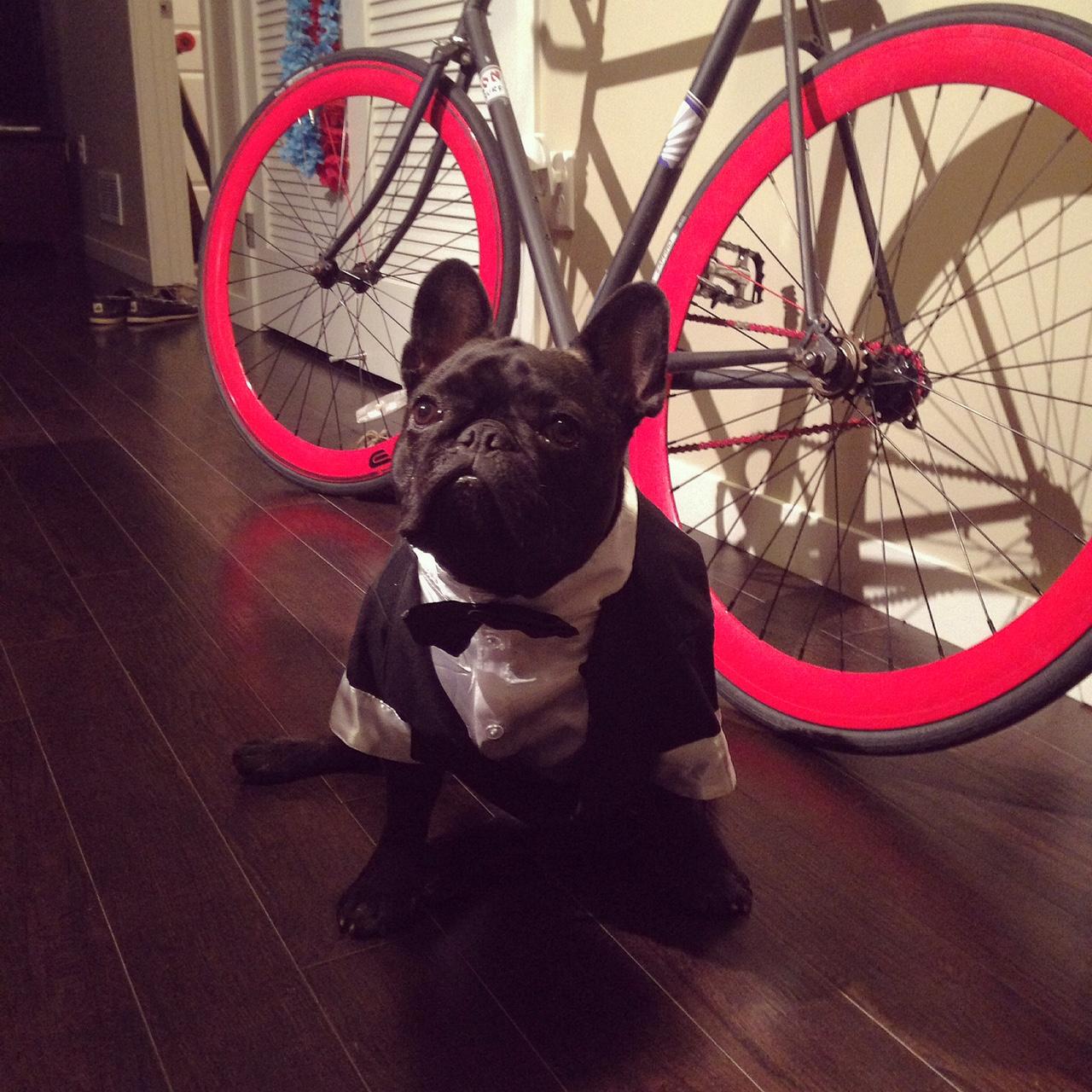 Gus-the-dog-300x168.jpg