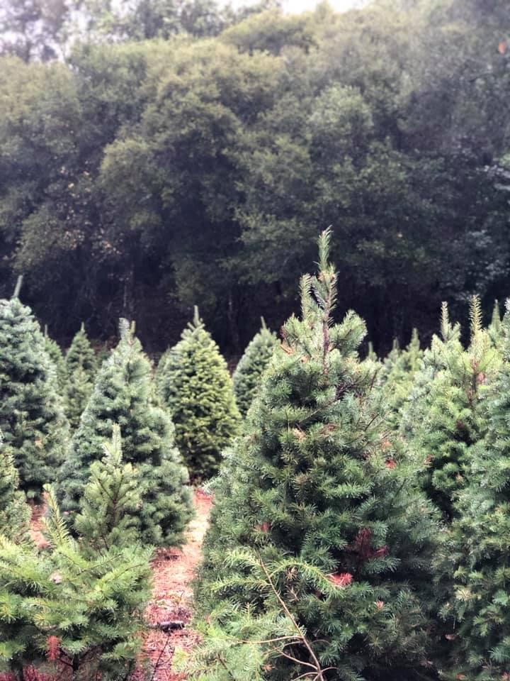 treefarm.jpg