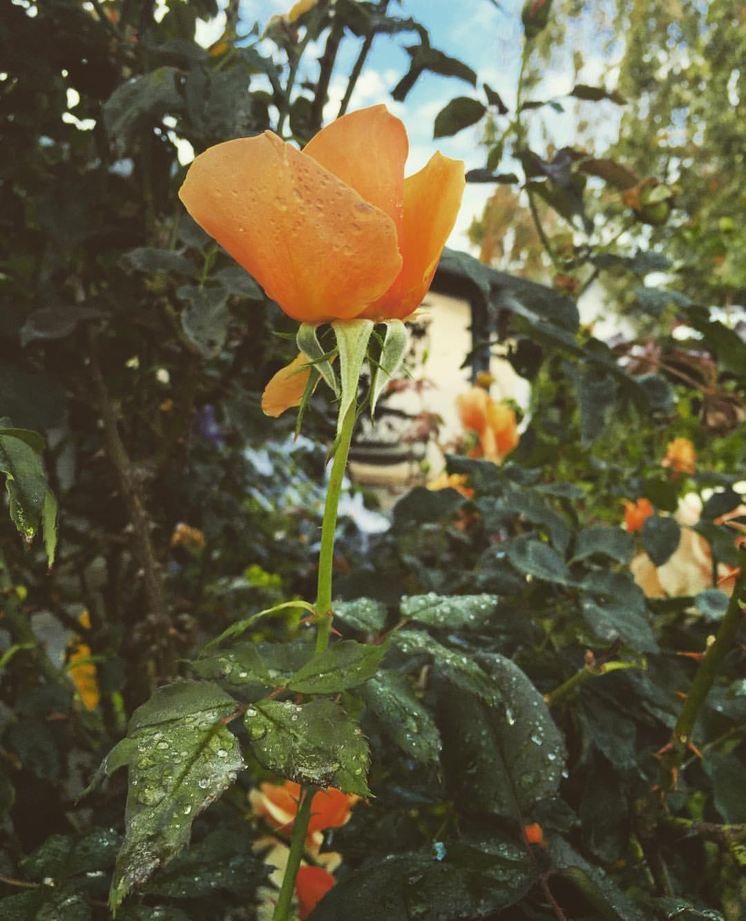 yardflowers.jpg