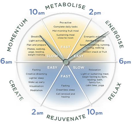 metabolic-clock.jpg