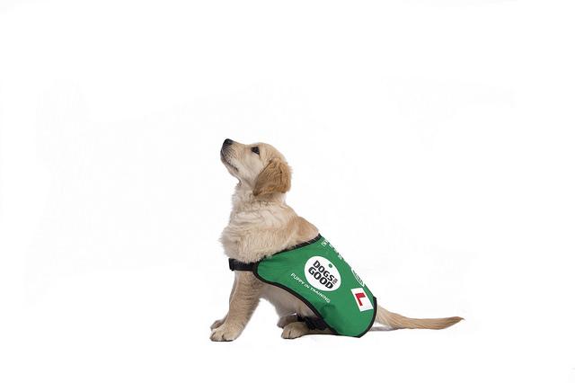 Puppy.2a.jpg