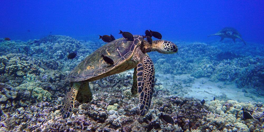 Aqua-Turtle-Reef.jpeg