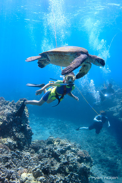 Turtle-Dive.jpg