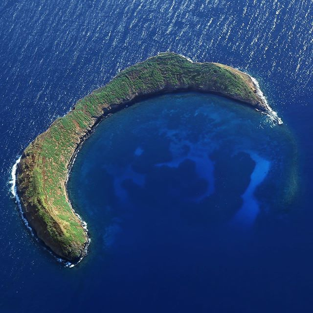 Check out snorkelmolokini.com to book your discounted Molokini snorkel trip! 🐠