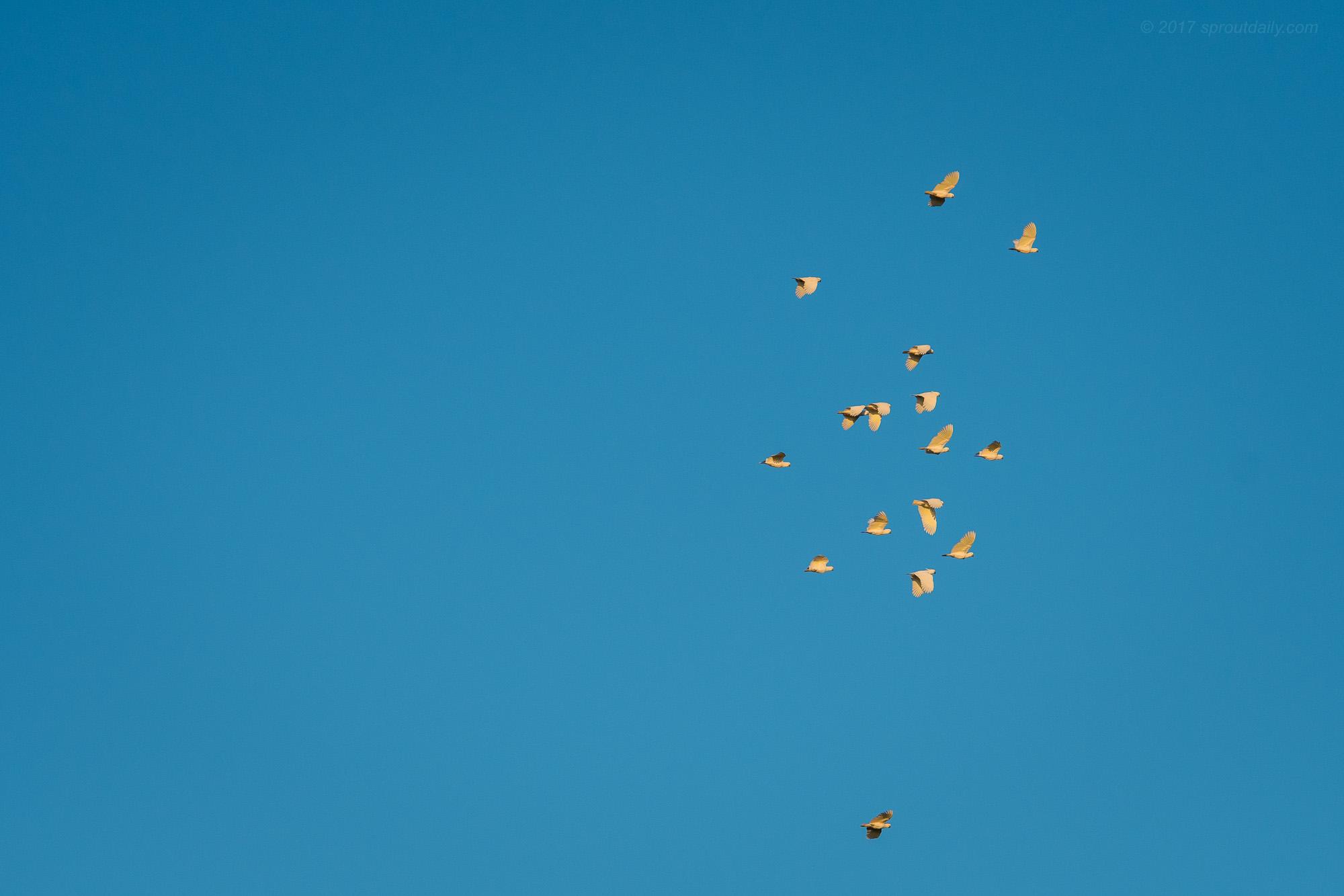 Flying Sulfar