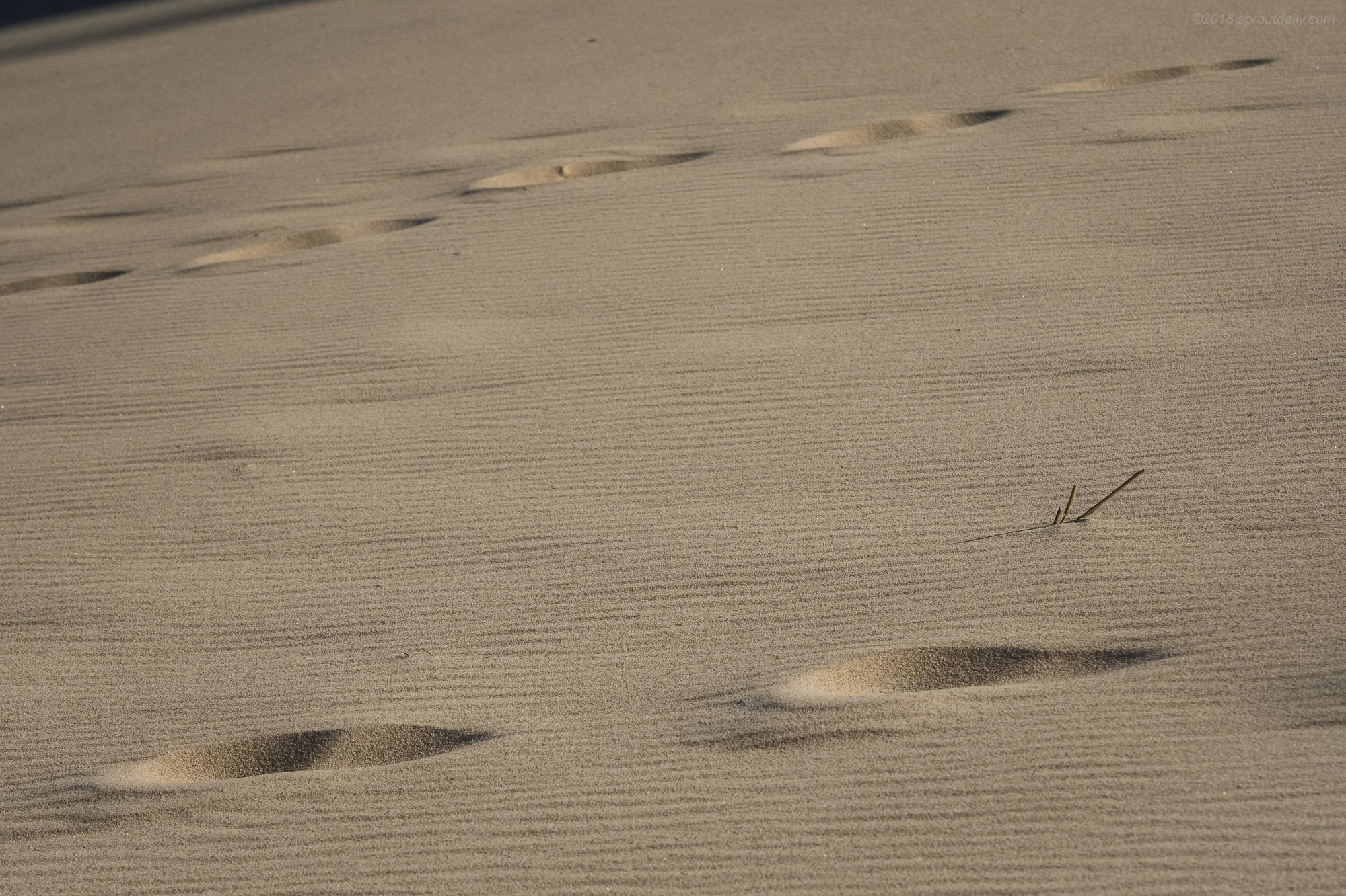 Dune Groom