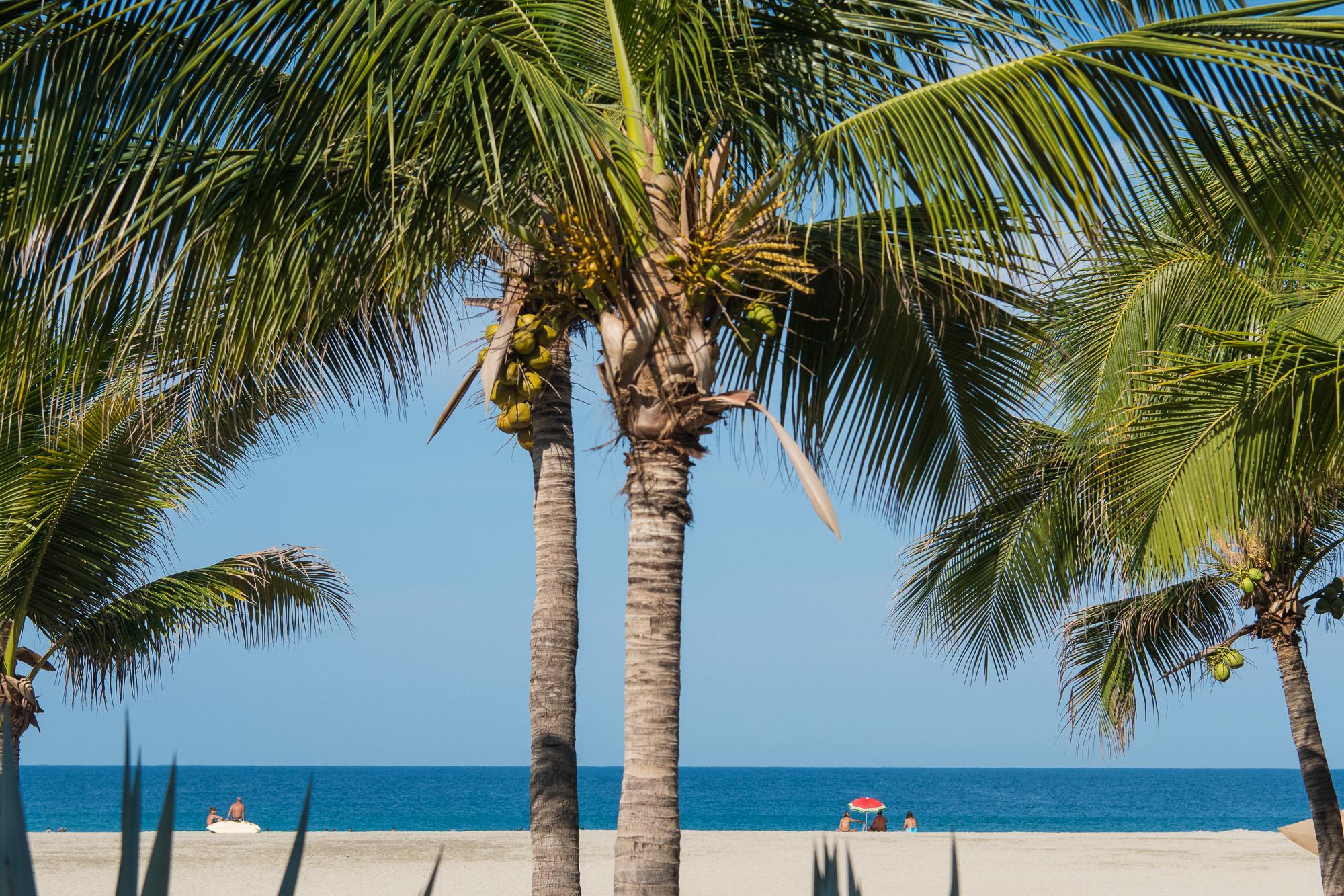 Coconut Palms & White Sand