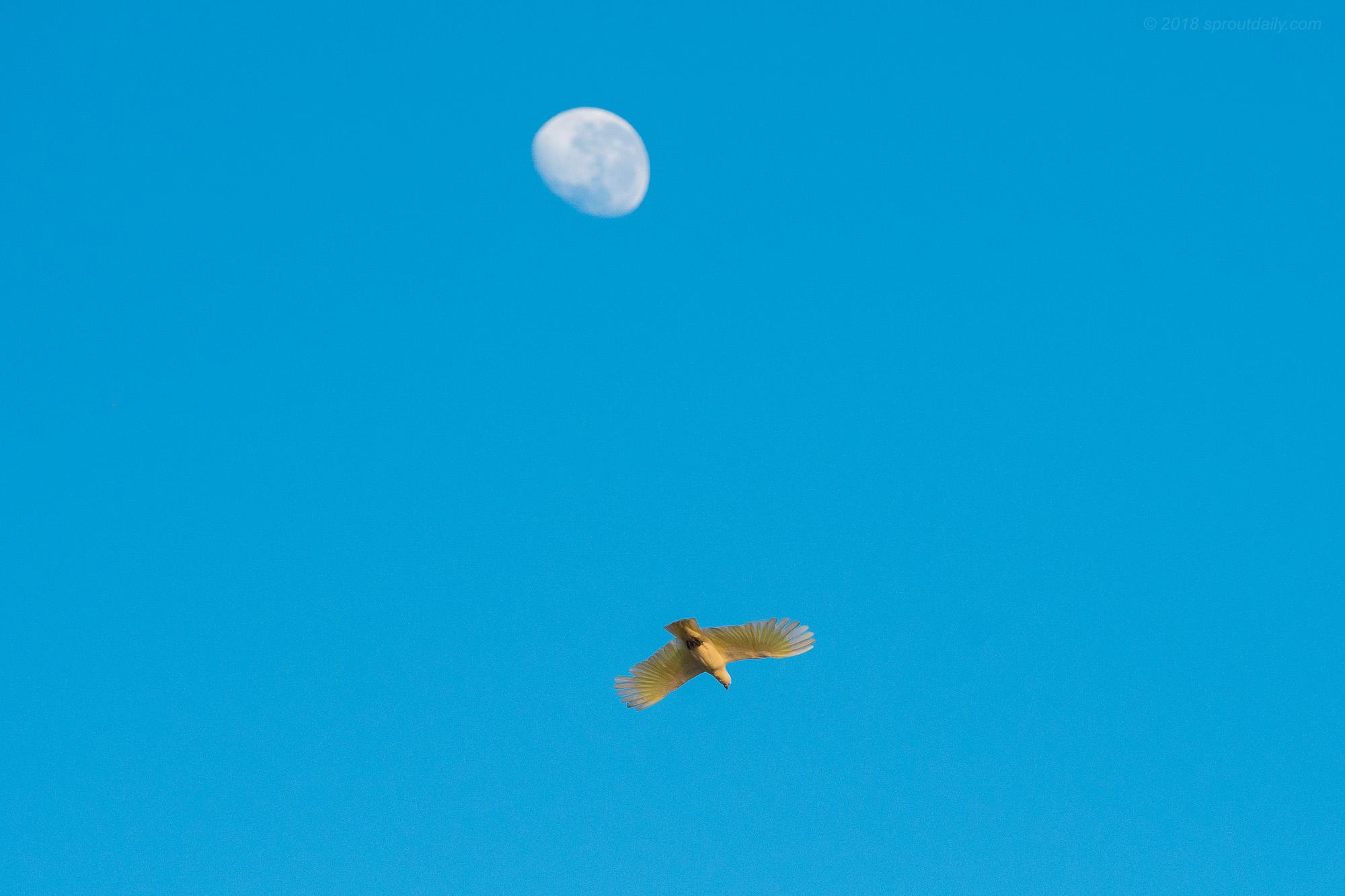 Sulphur Flight