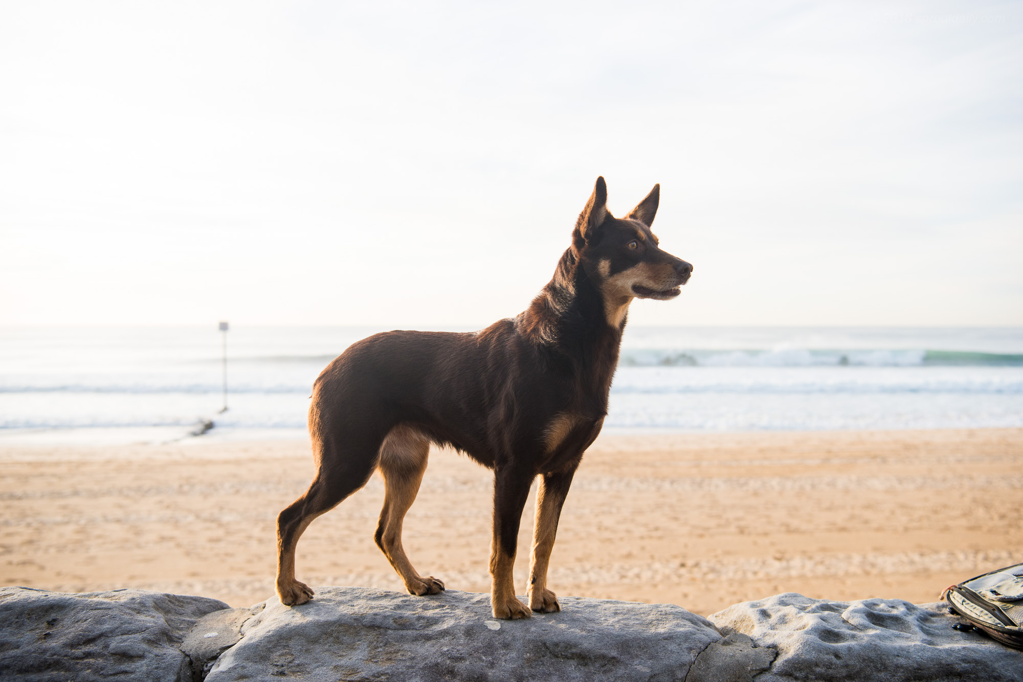 Ear's Are Up - Must be waves!