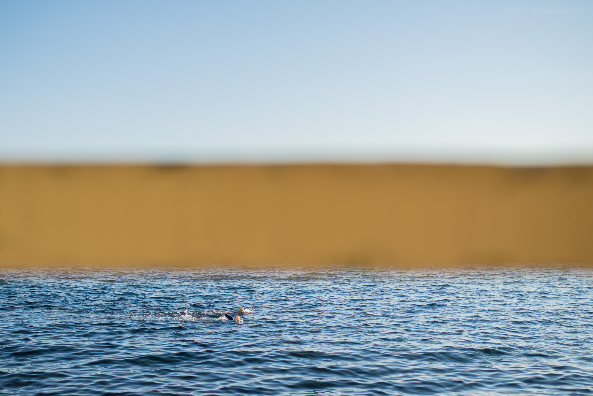 Blue Swims