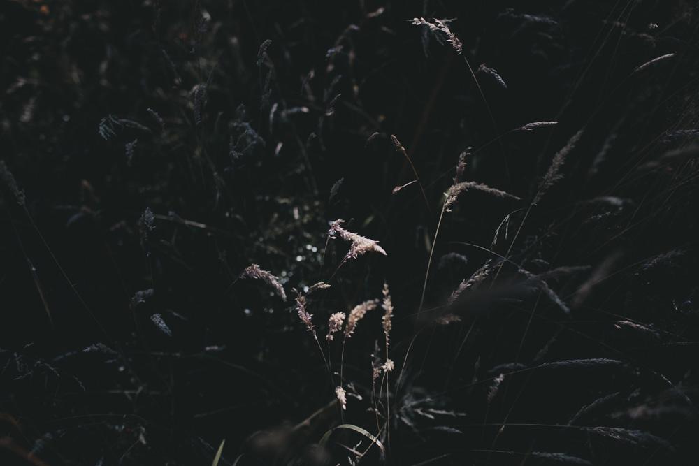 meliamelia_013.jpg