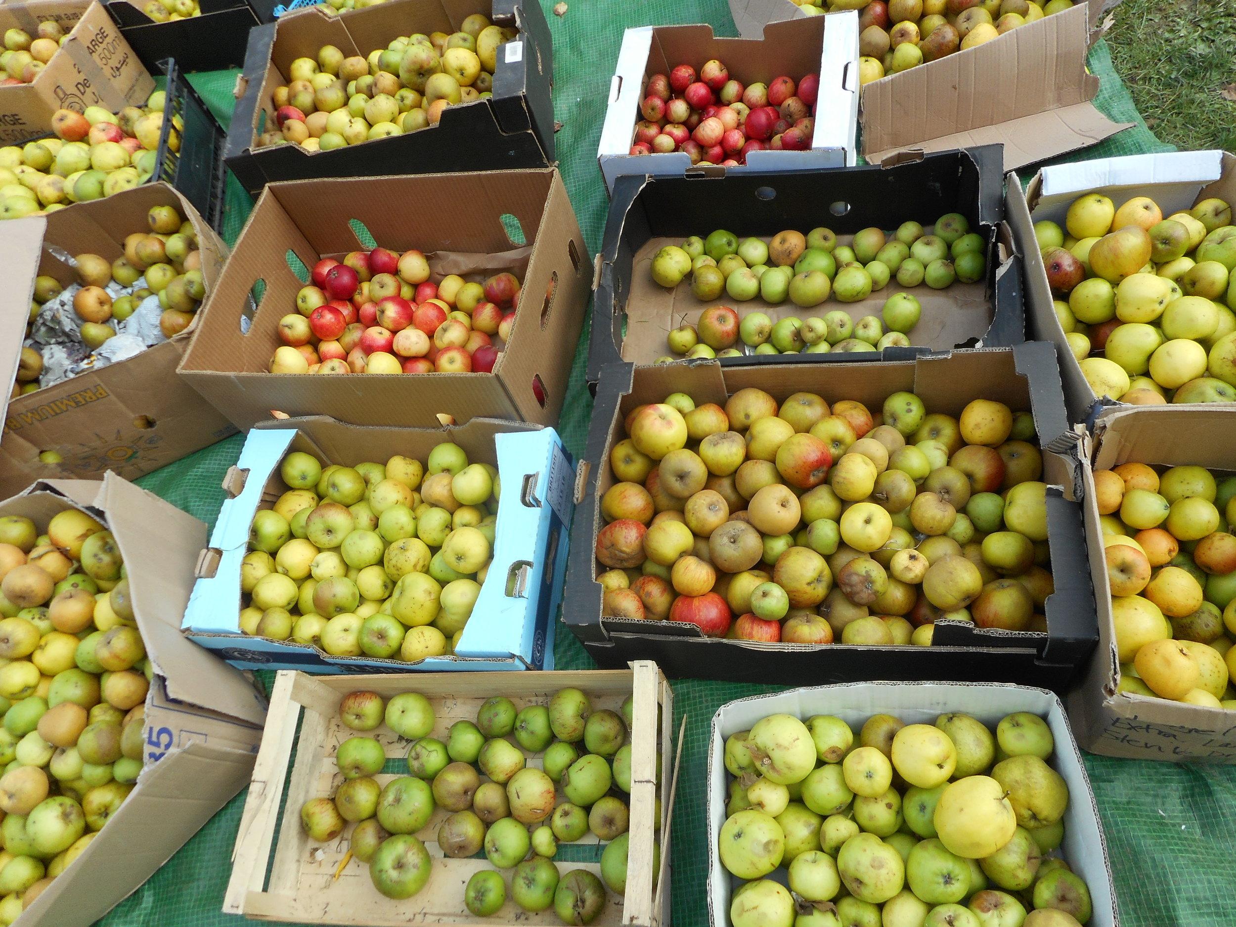 apple-day.jpg