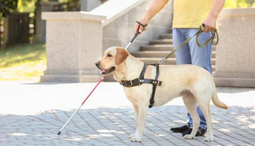 NEW SERVICE ANIMAL LAW & CONTRADICTIONS BETWEEN WASHINGTON & FEDERAL LAW