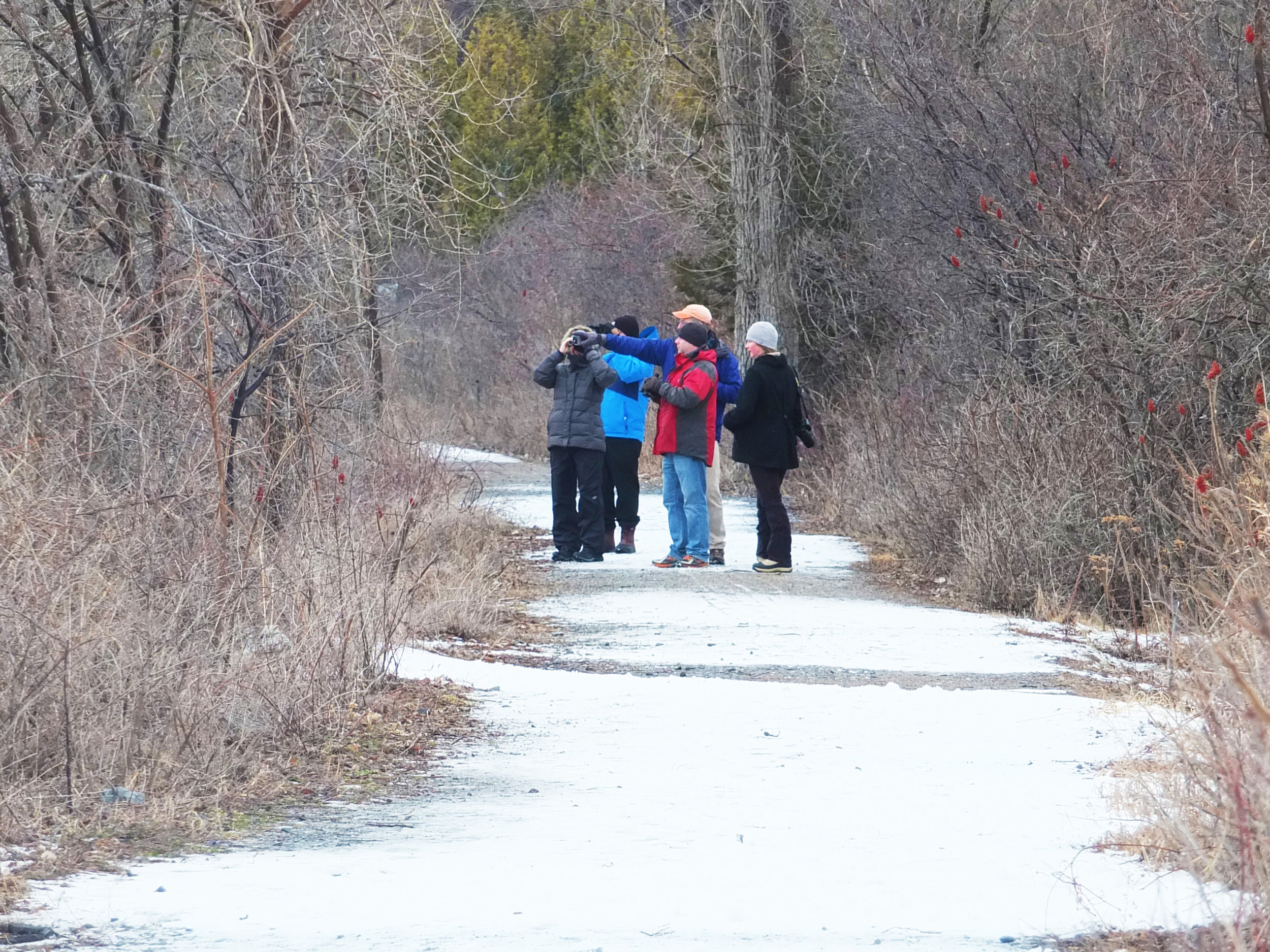 Walkers on Allen Point Trail look for winter birds.