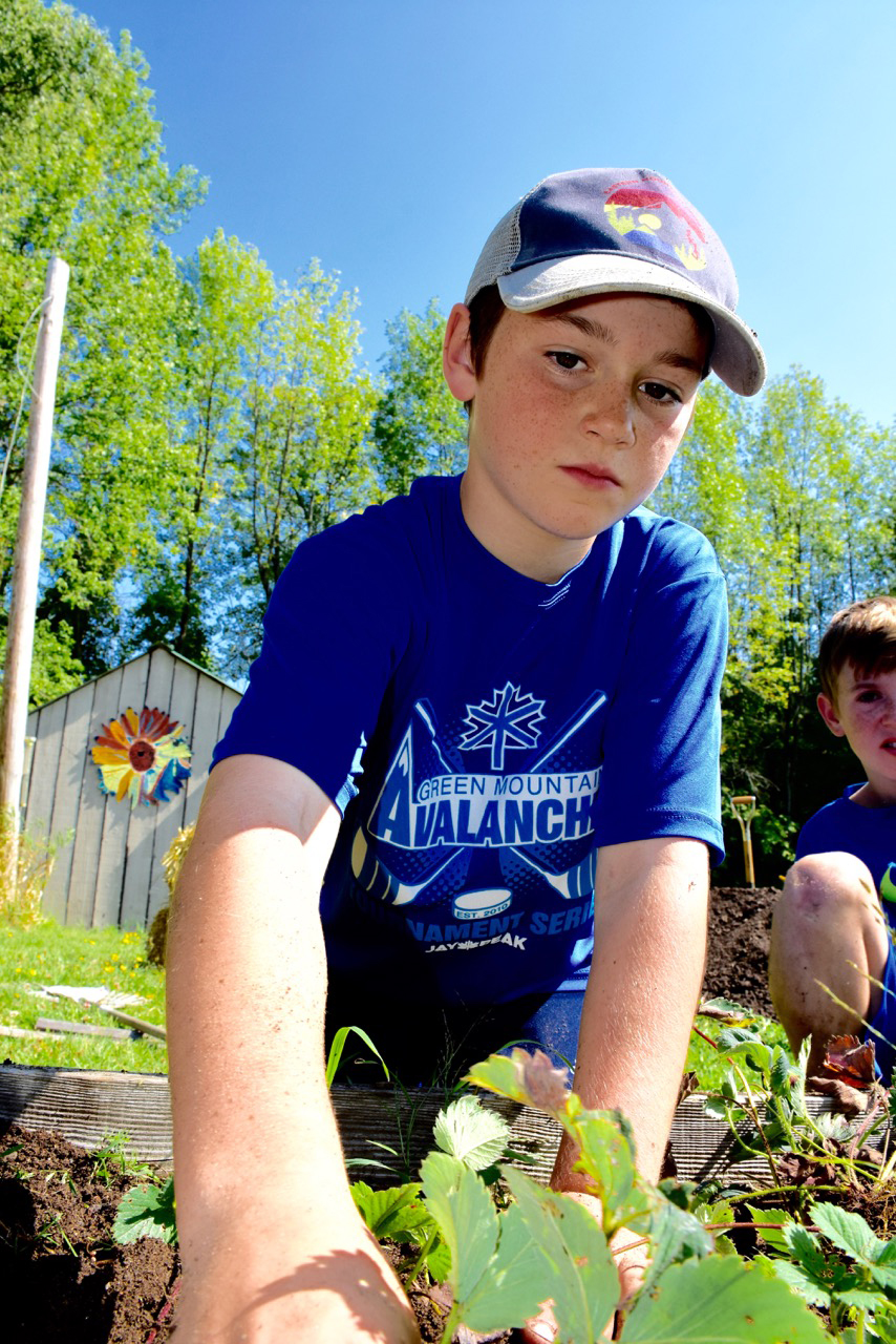 Weeding strawberries in the Folsom School & Community Garden