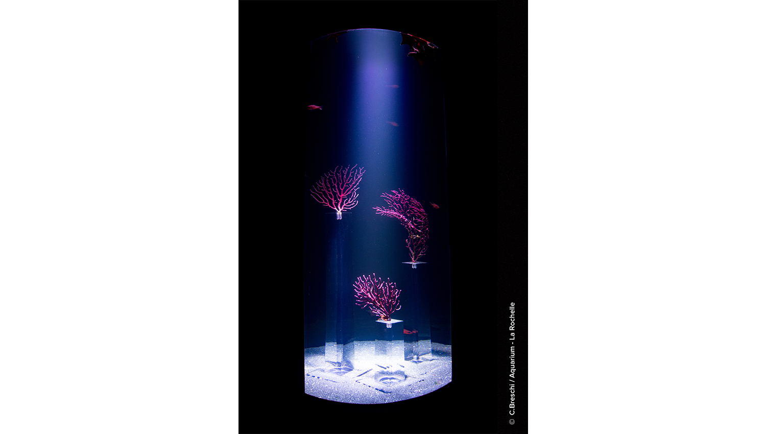 aquarium1-05-sport&culture-equipement&tertiaire-alterlab.jpg