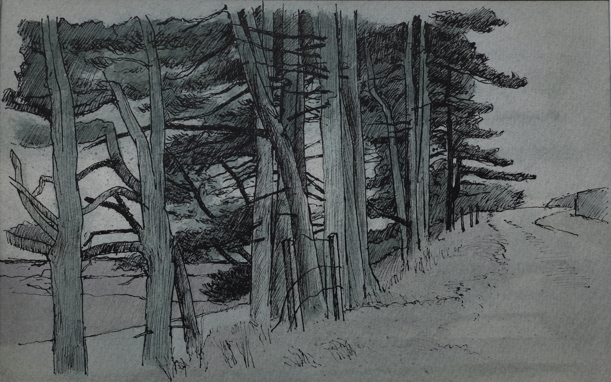 Stand of Pines, W 56 x H 46, watercolour and Ink, £300