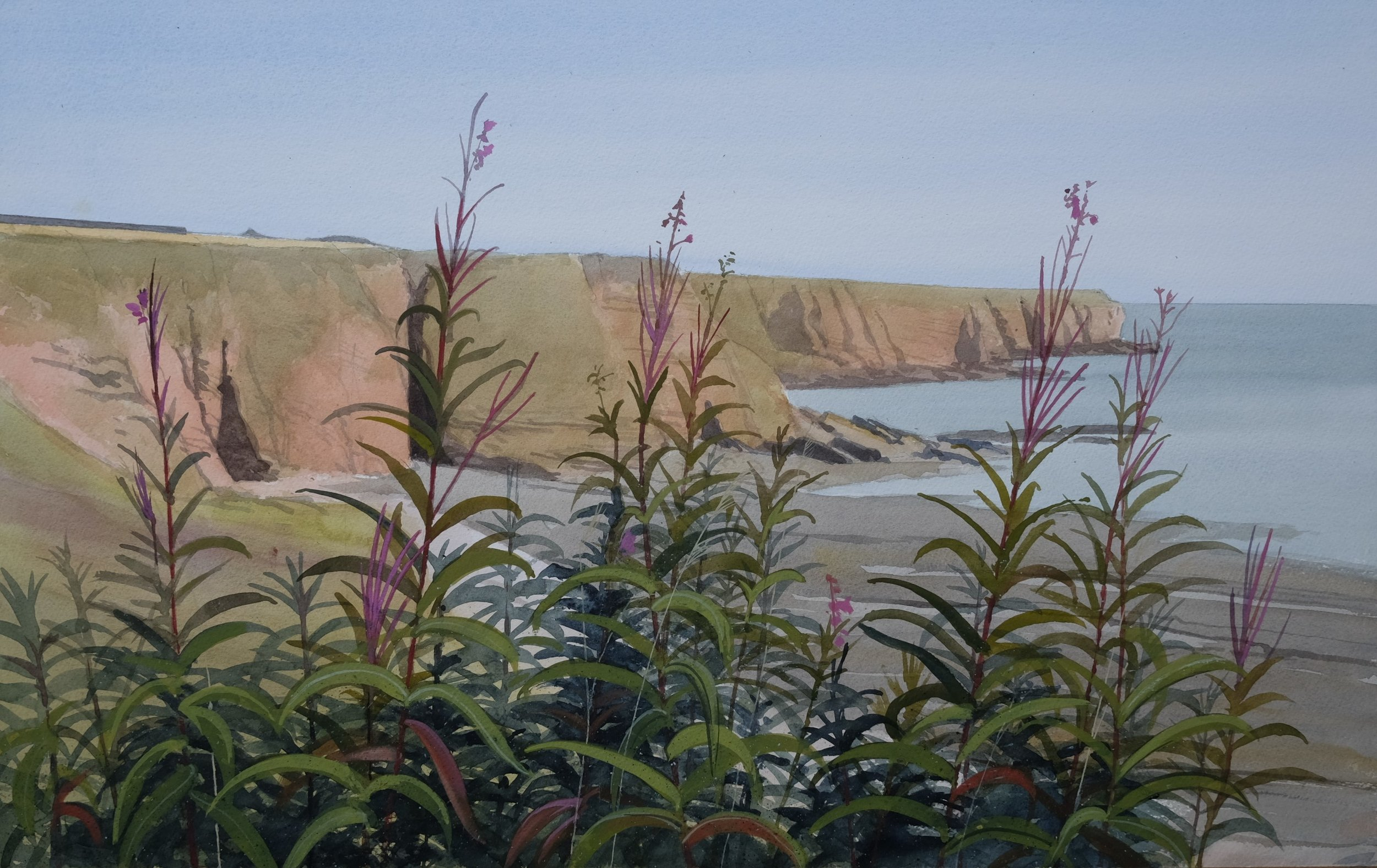 Rosebay Willow Herb, W 97 x H 73, watercolour, £1950