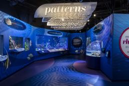 Overall Winners   Underwater Beauty   Shedd Aquarium Chicago, Illinois   · Excelled – innovative design, environments, graphics, interpretation = EQUILIBRIUM  · Exhibition synthesized – evocative, beautiful designs with clear content and easily presented ideas