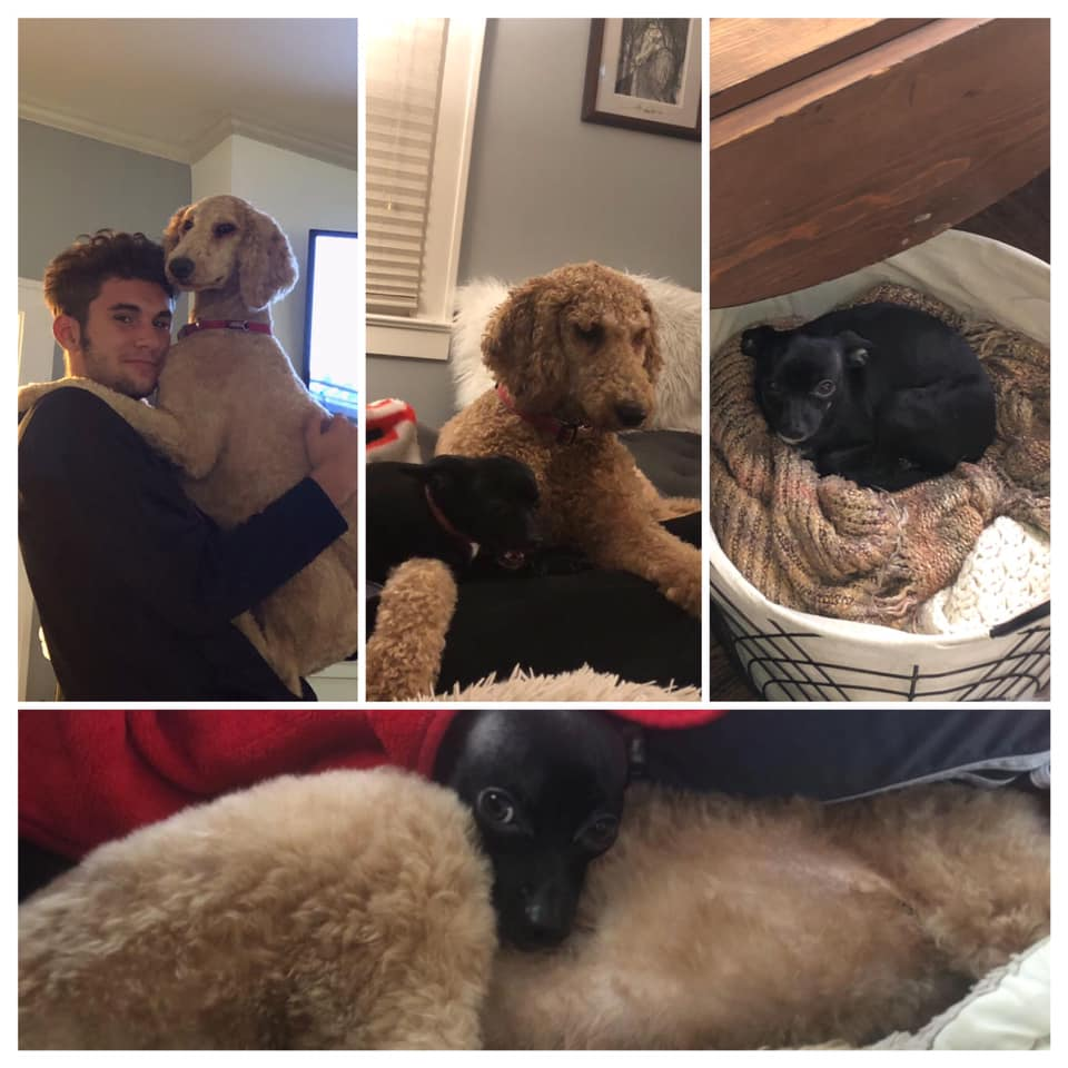 Jason Heims' son Drew and dogs: Shazier, Golden Doodle, age 2. Tito, Chihuahua, age 3. Luna, Chihuahua, age 2.