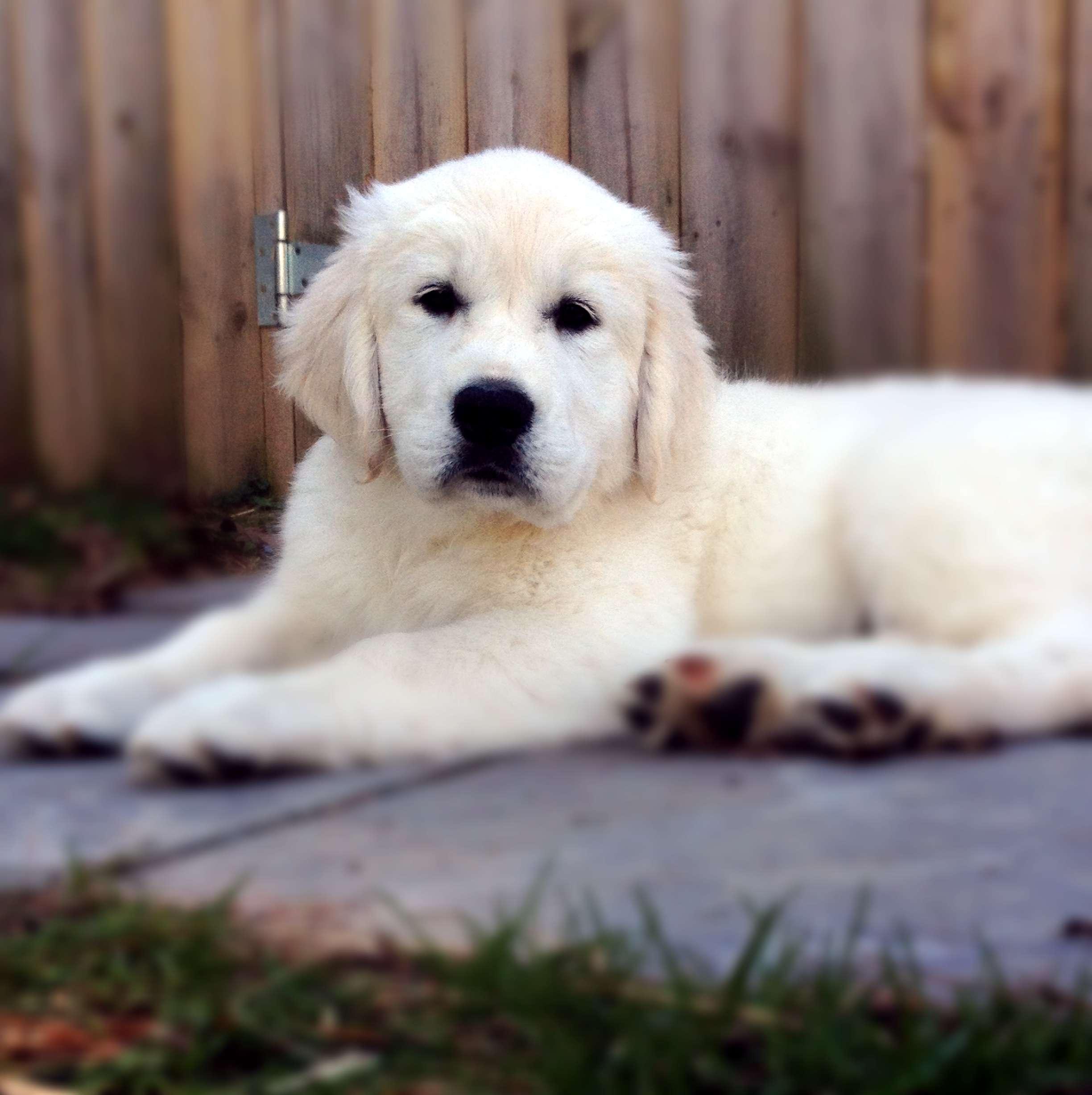 IMG_2519 Nola head 2017 puppy blur.jpg