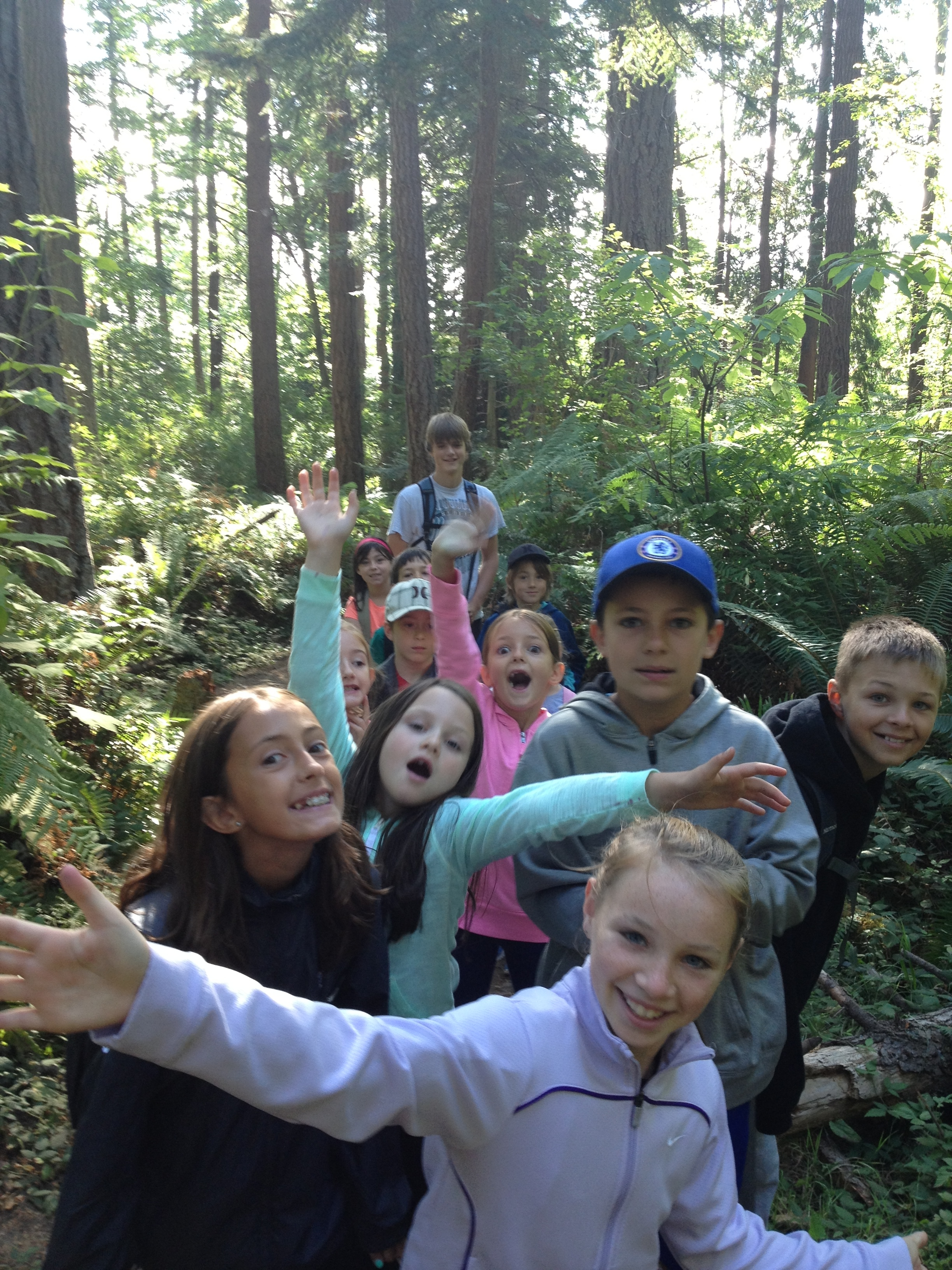 forest discovery image2015.jpg