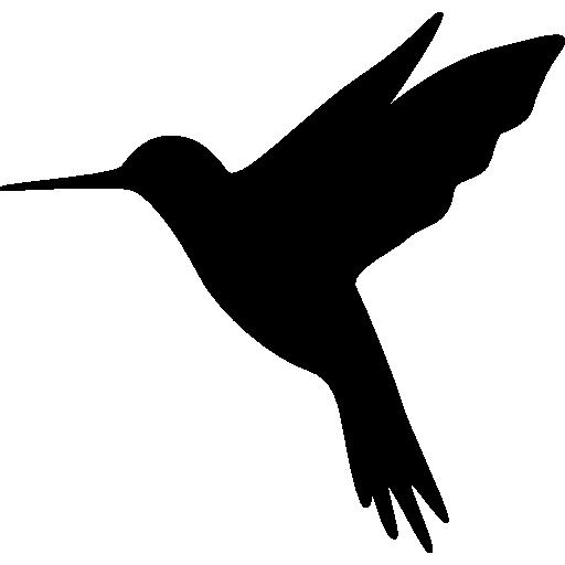 Hummingbird meditation -