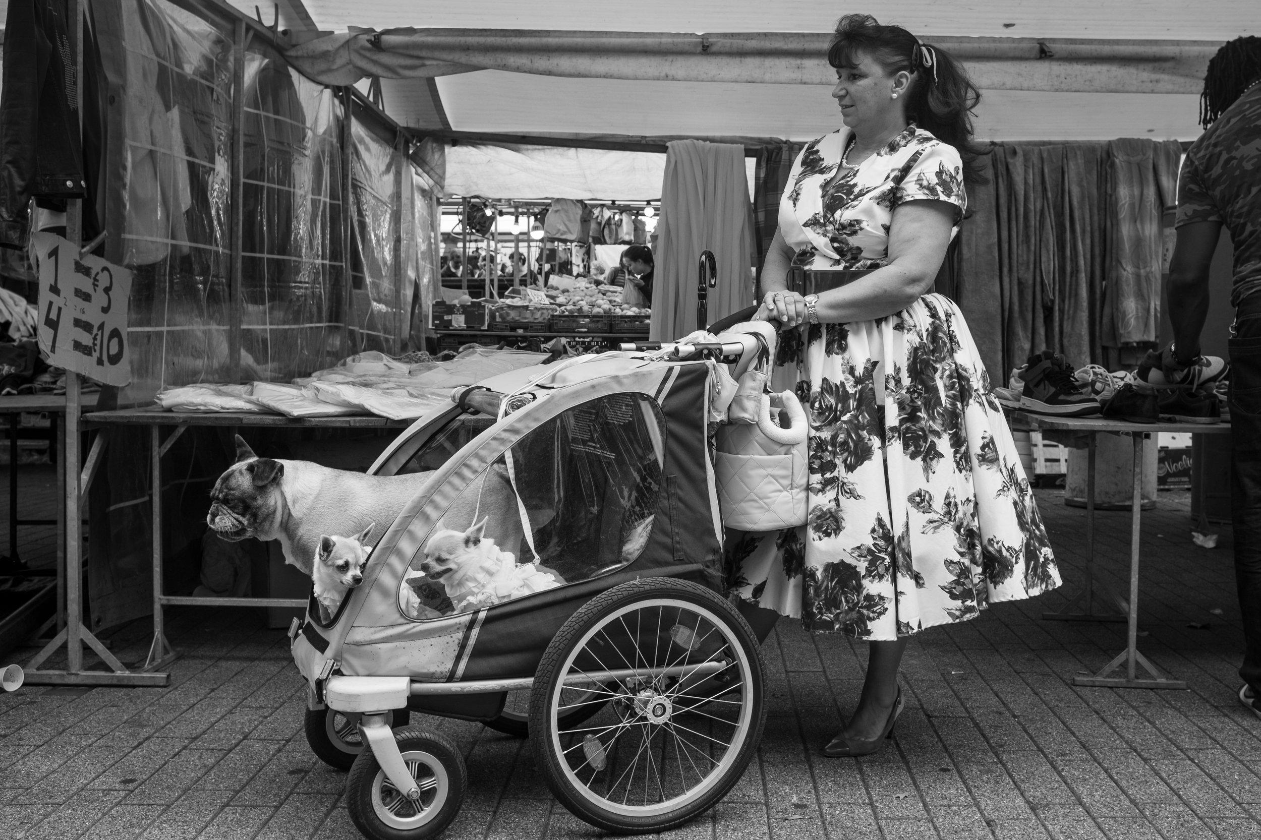stock-photo-dog-stroller-82348083.jpg