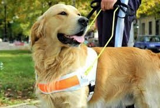 September is National Guide Dog month!