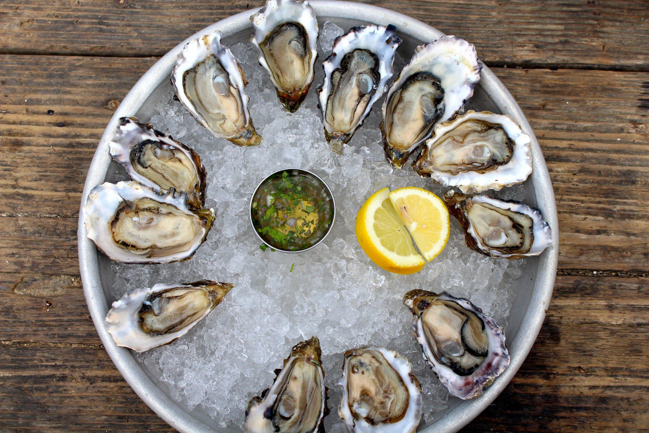 Hog_Island_Oysters