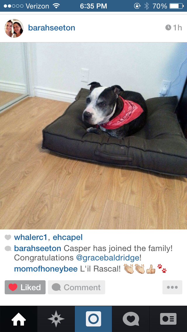 Instagram_Rescue_Dog