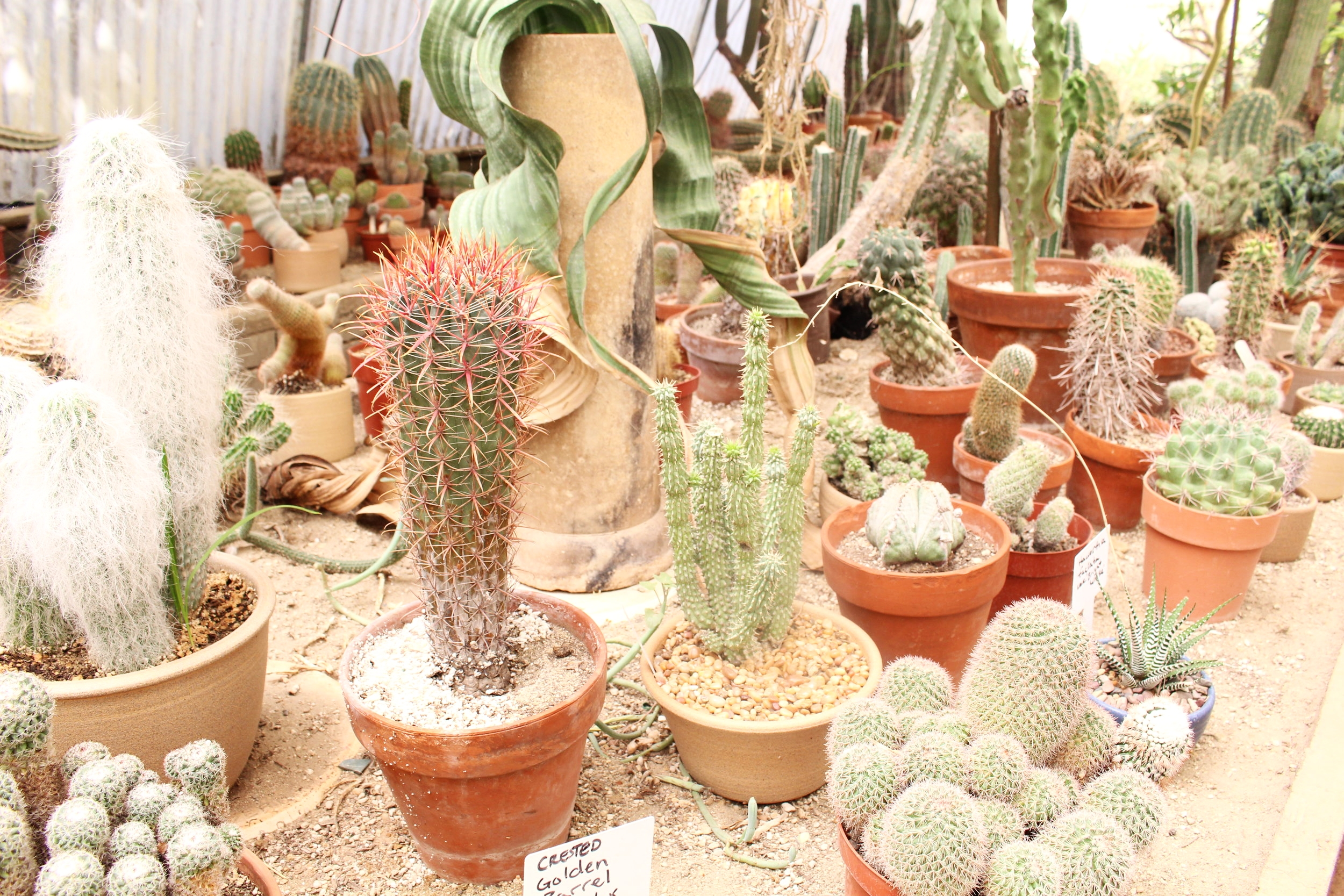 Moorten_Botanical_Garden
