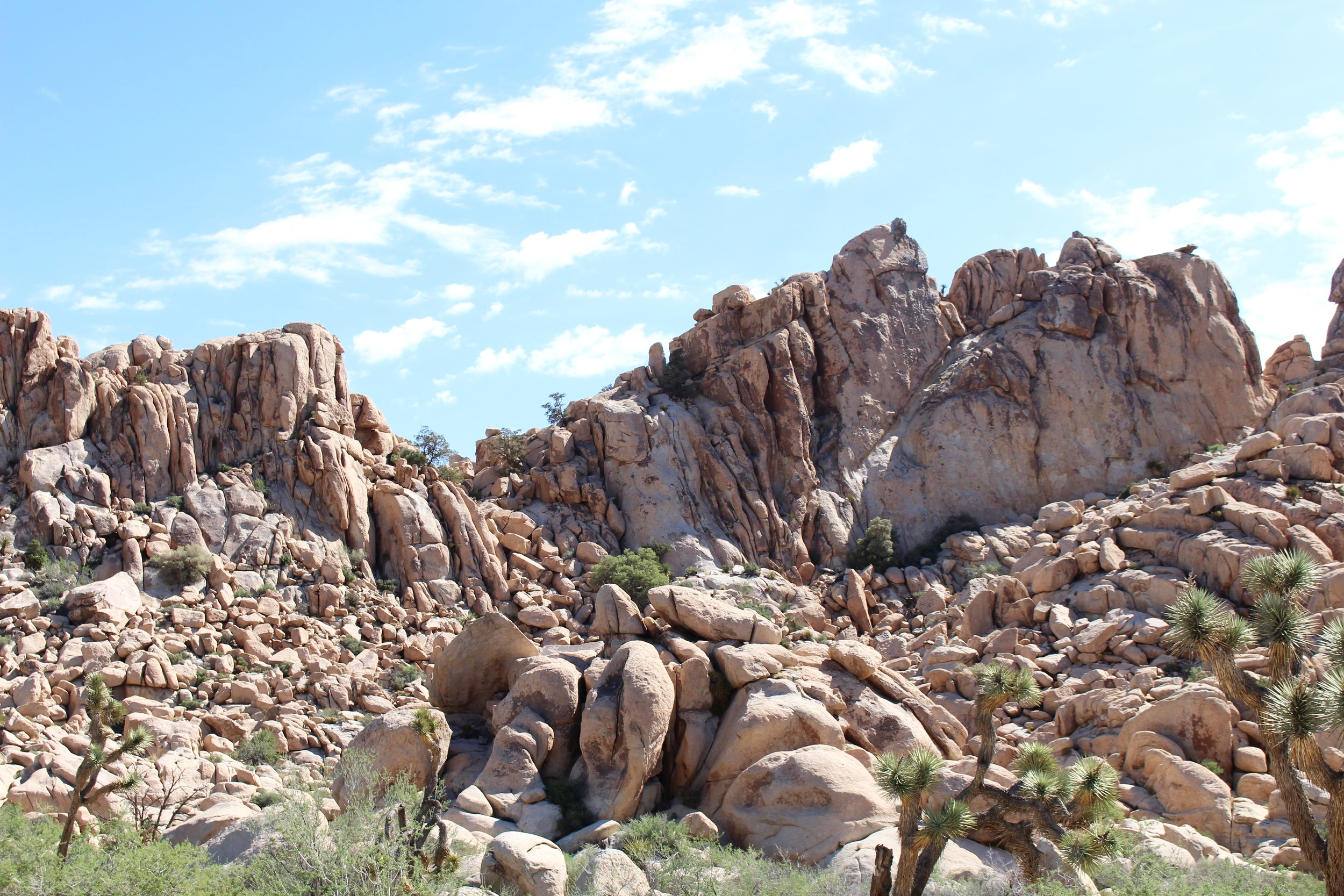 Joshua_Tree_Rocks