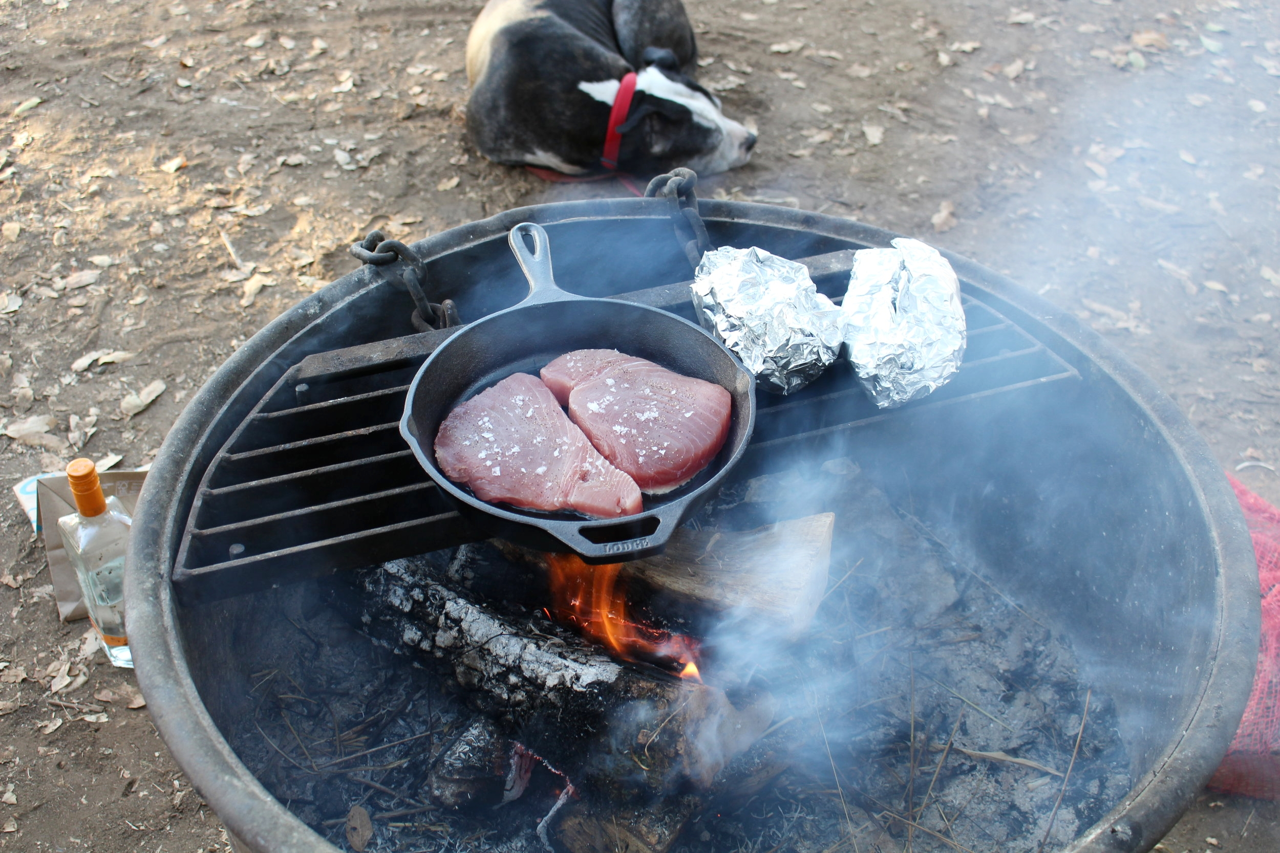 Tuna_Steaks_Camping