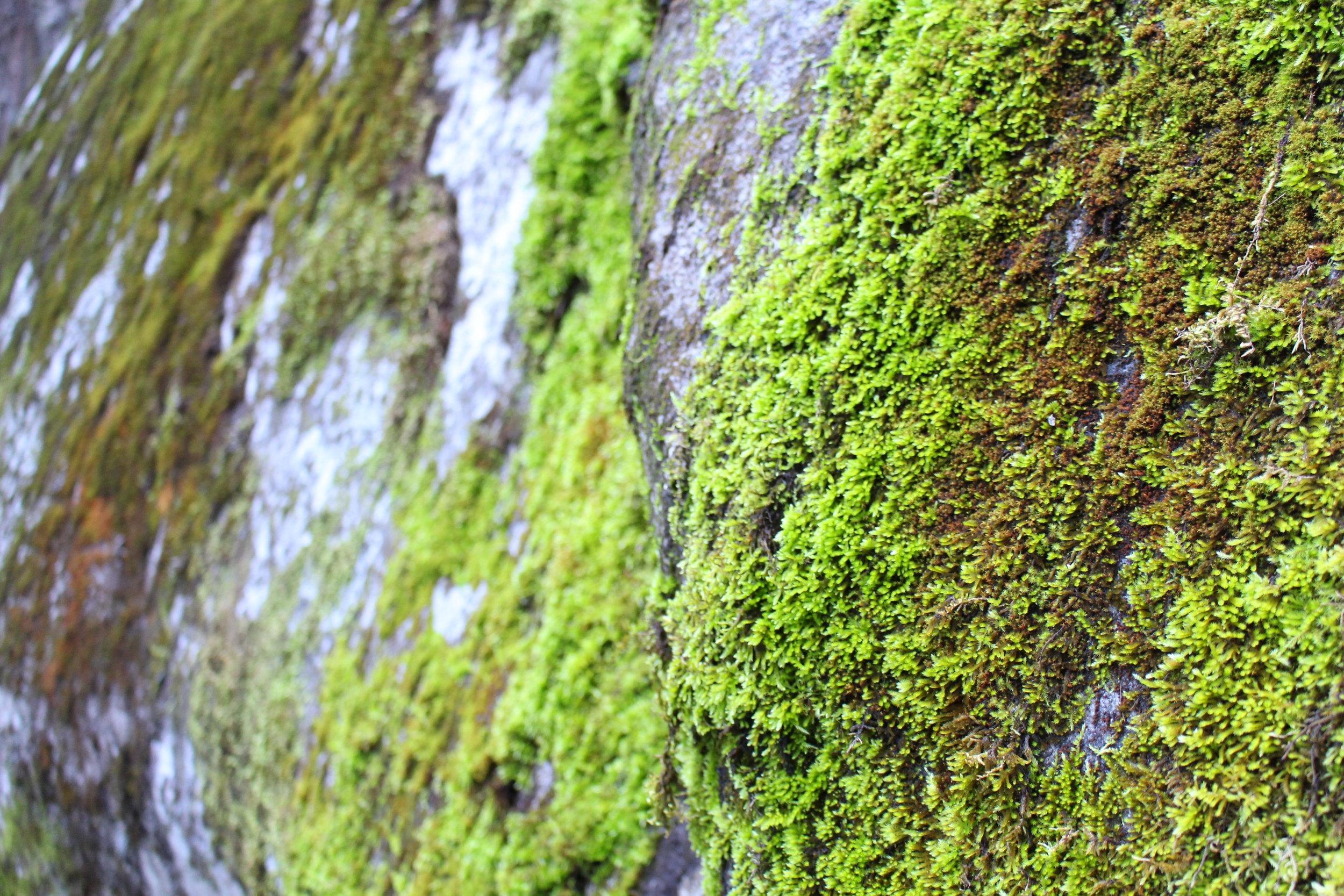 Yosemite_Moss