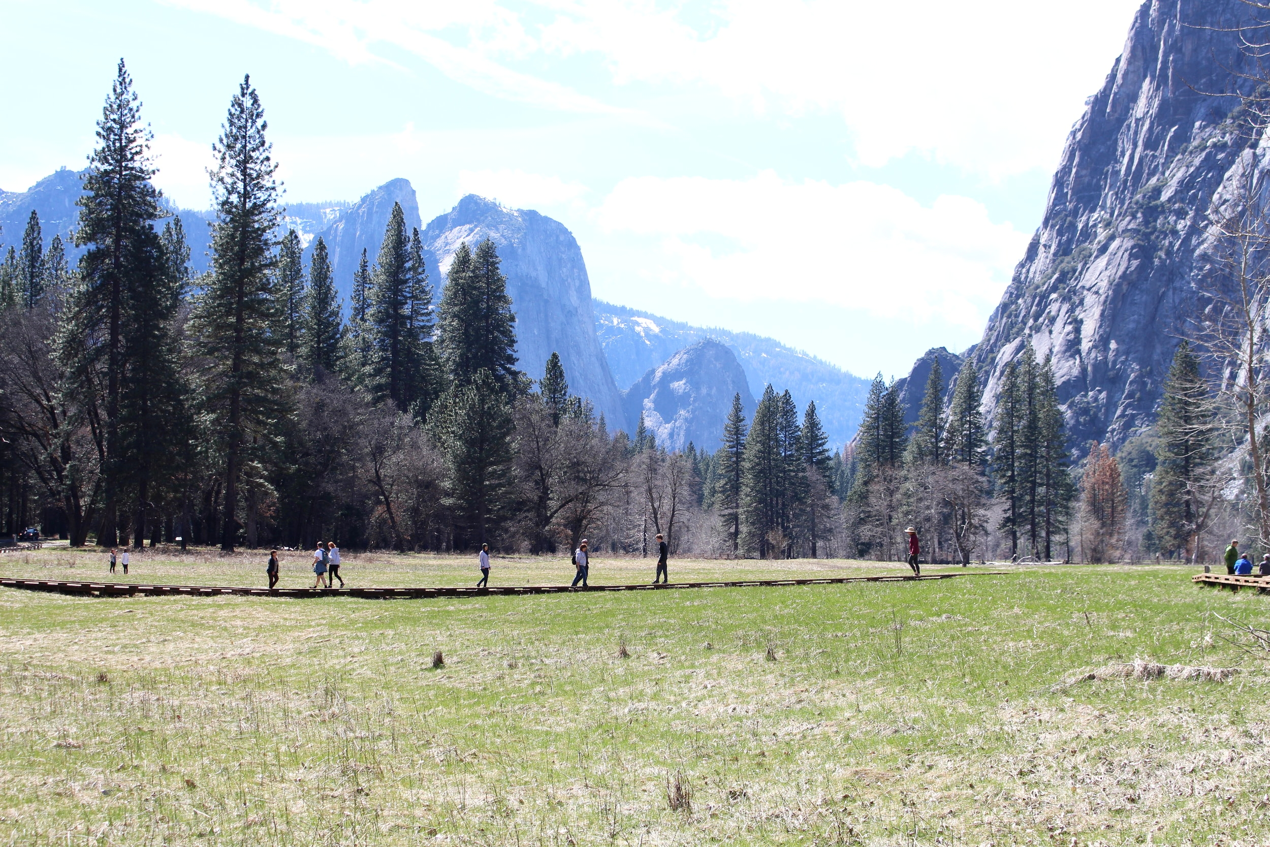 Yosemite_Meadows