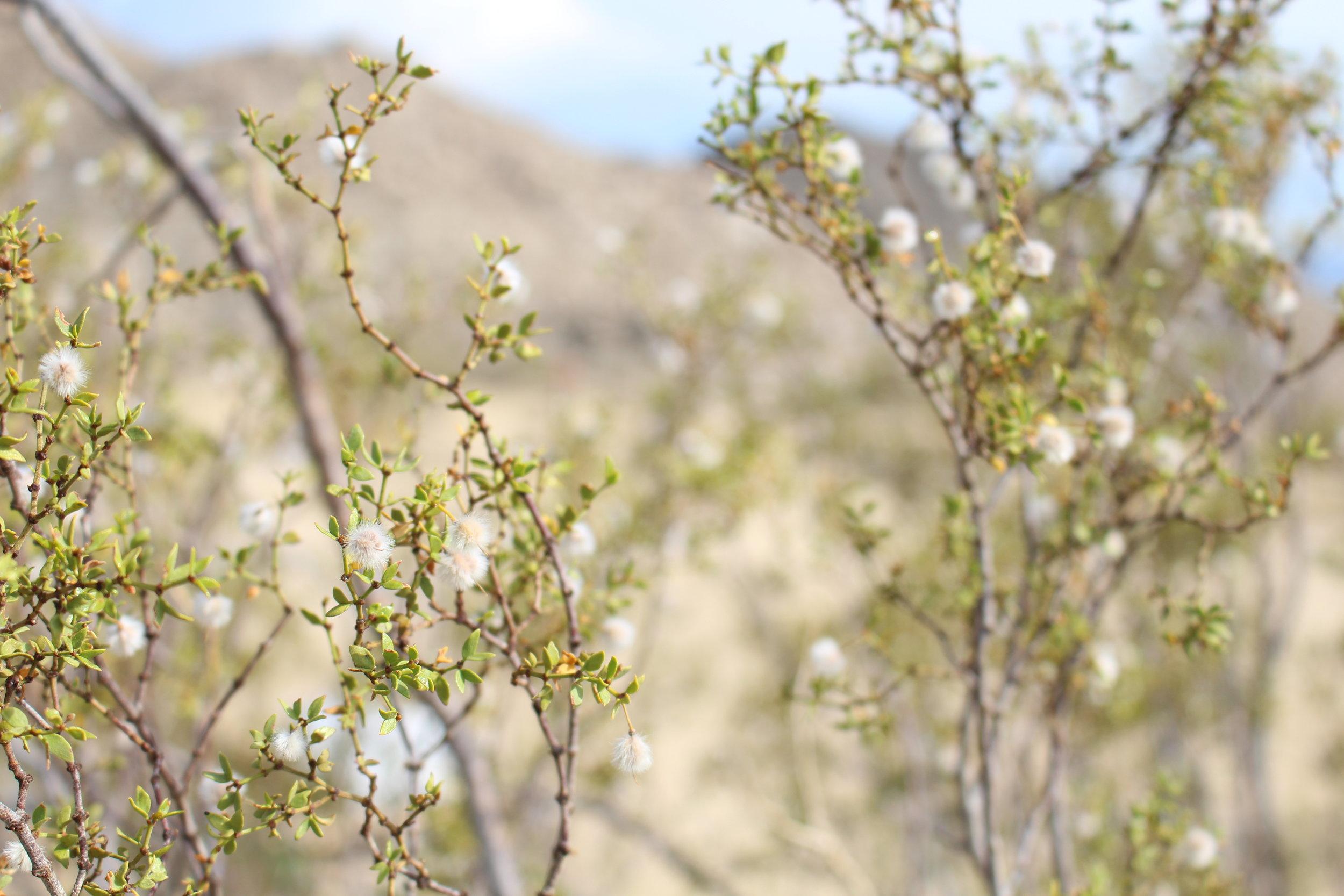 Desert_Scenery