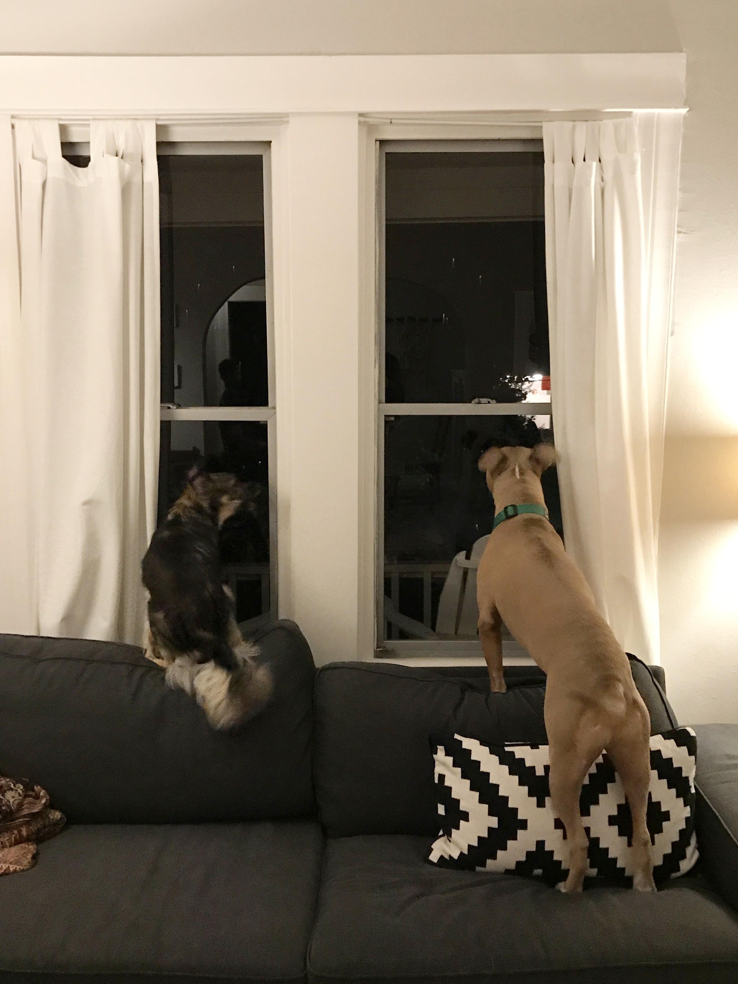 Dogs_Portland_House