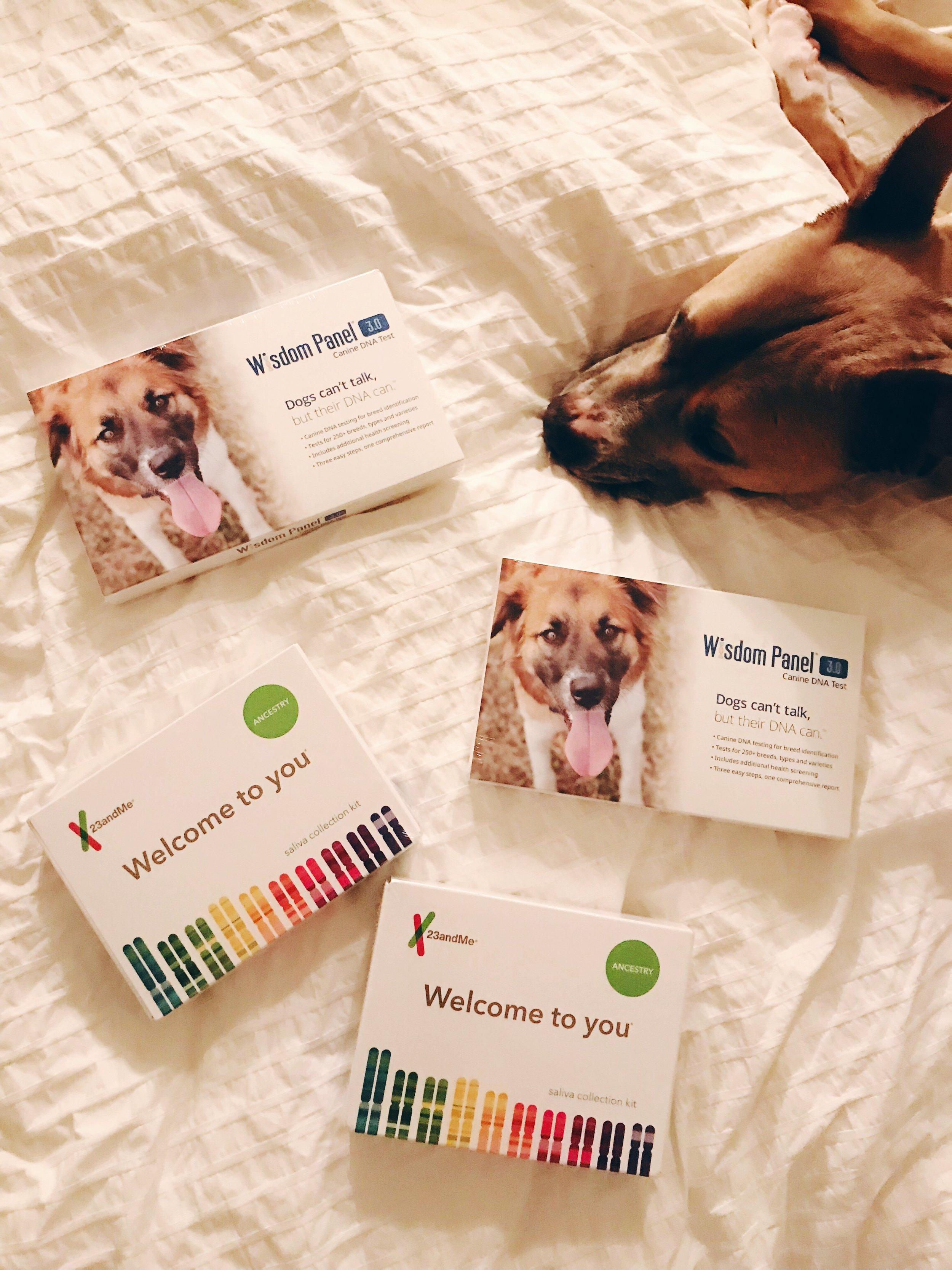 Dog_DNA_Tests