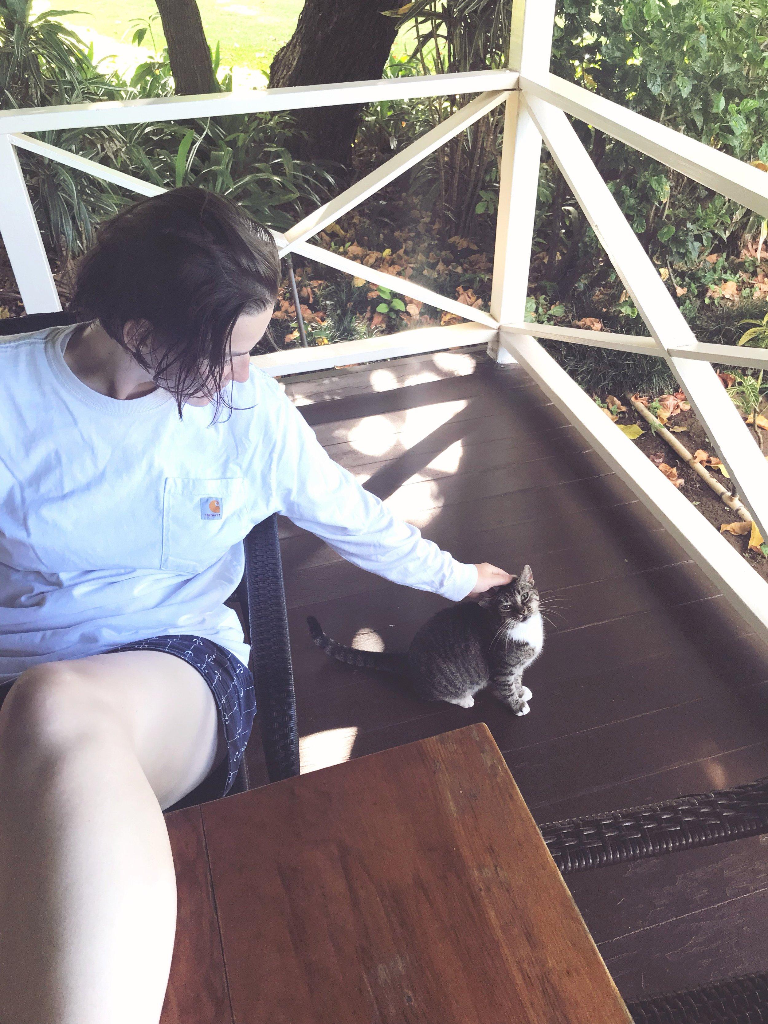 Waimea_Cat