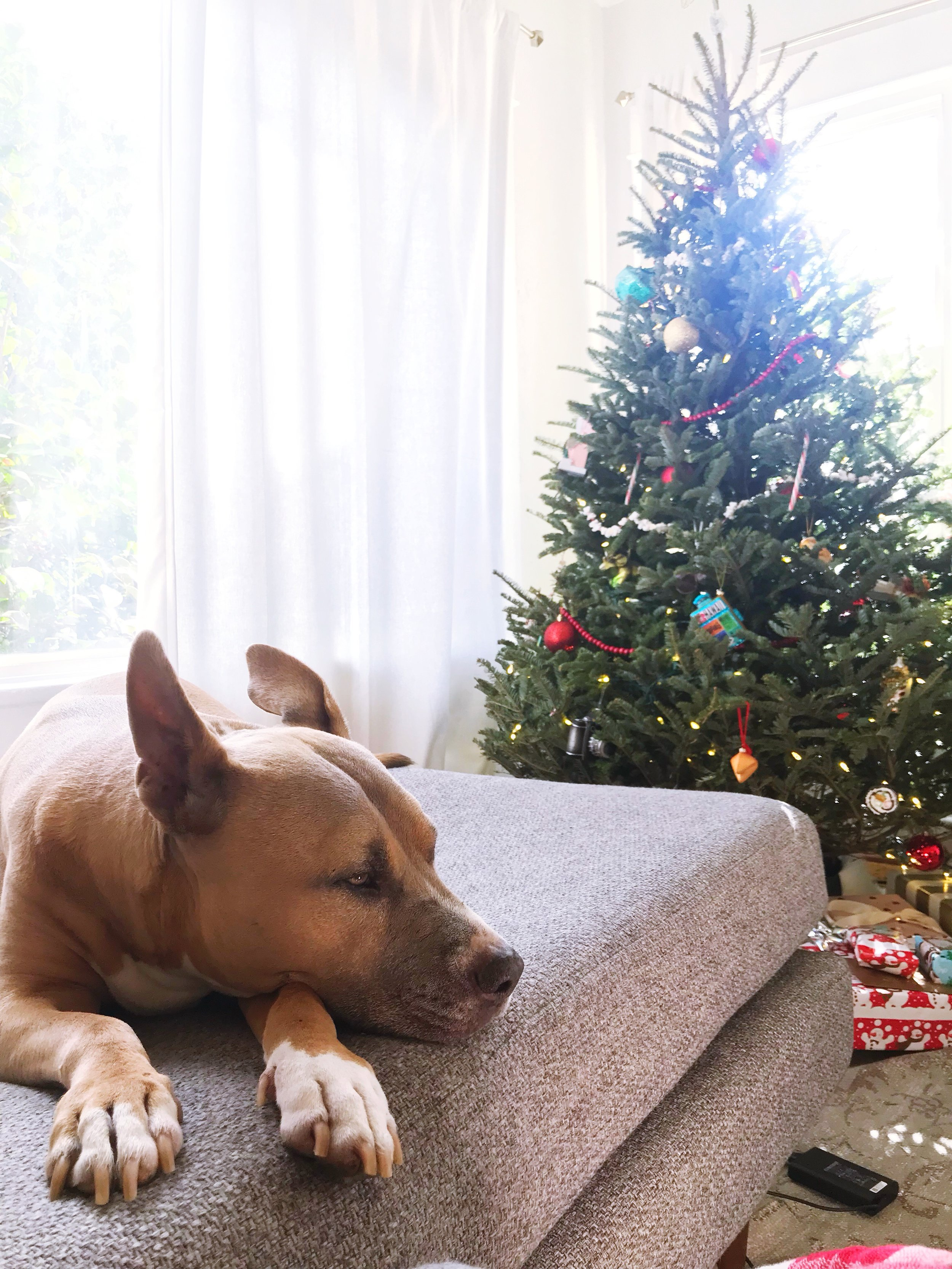 Cozy_Christmas_Decor.JPG